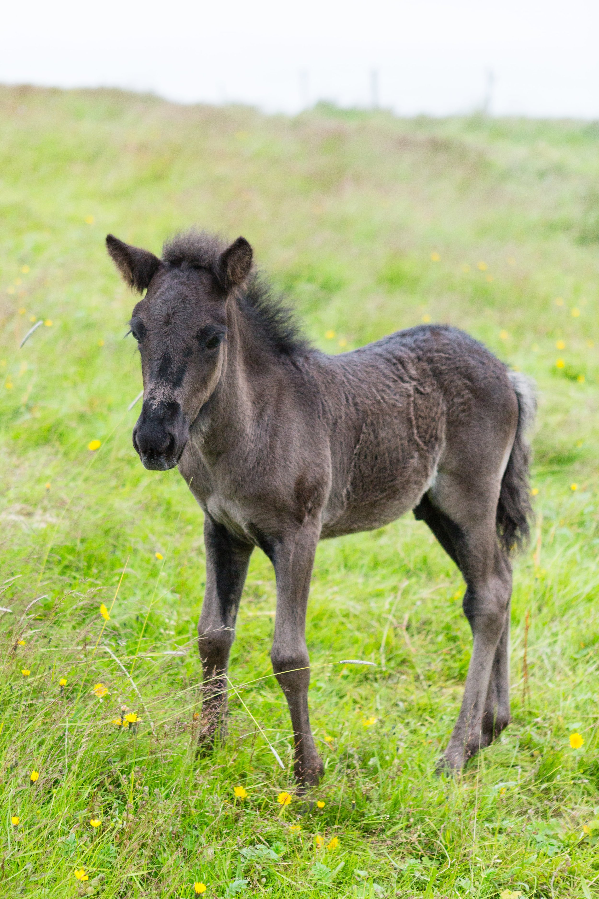 Horses in Iceland by Jen Madigan now on Cottage Hill21.jpg
