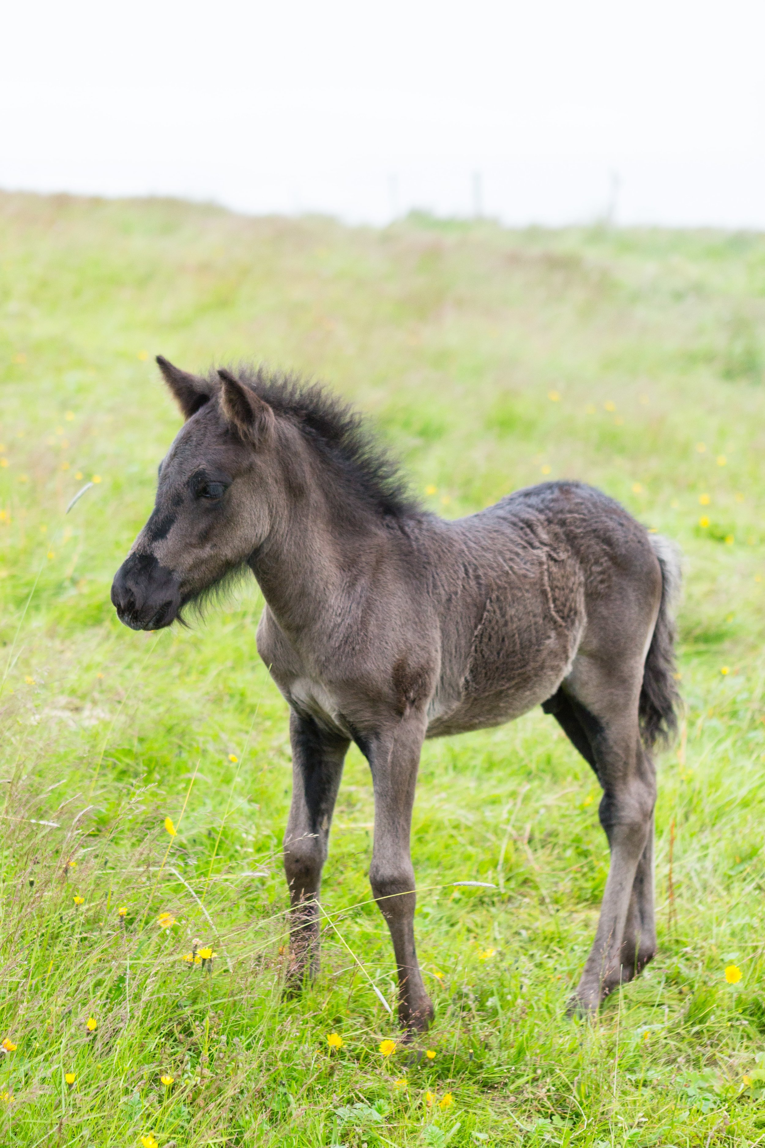 Horses in Iceland by Jen Madigan now on Cottage Hill22.jpg