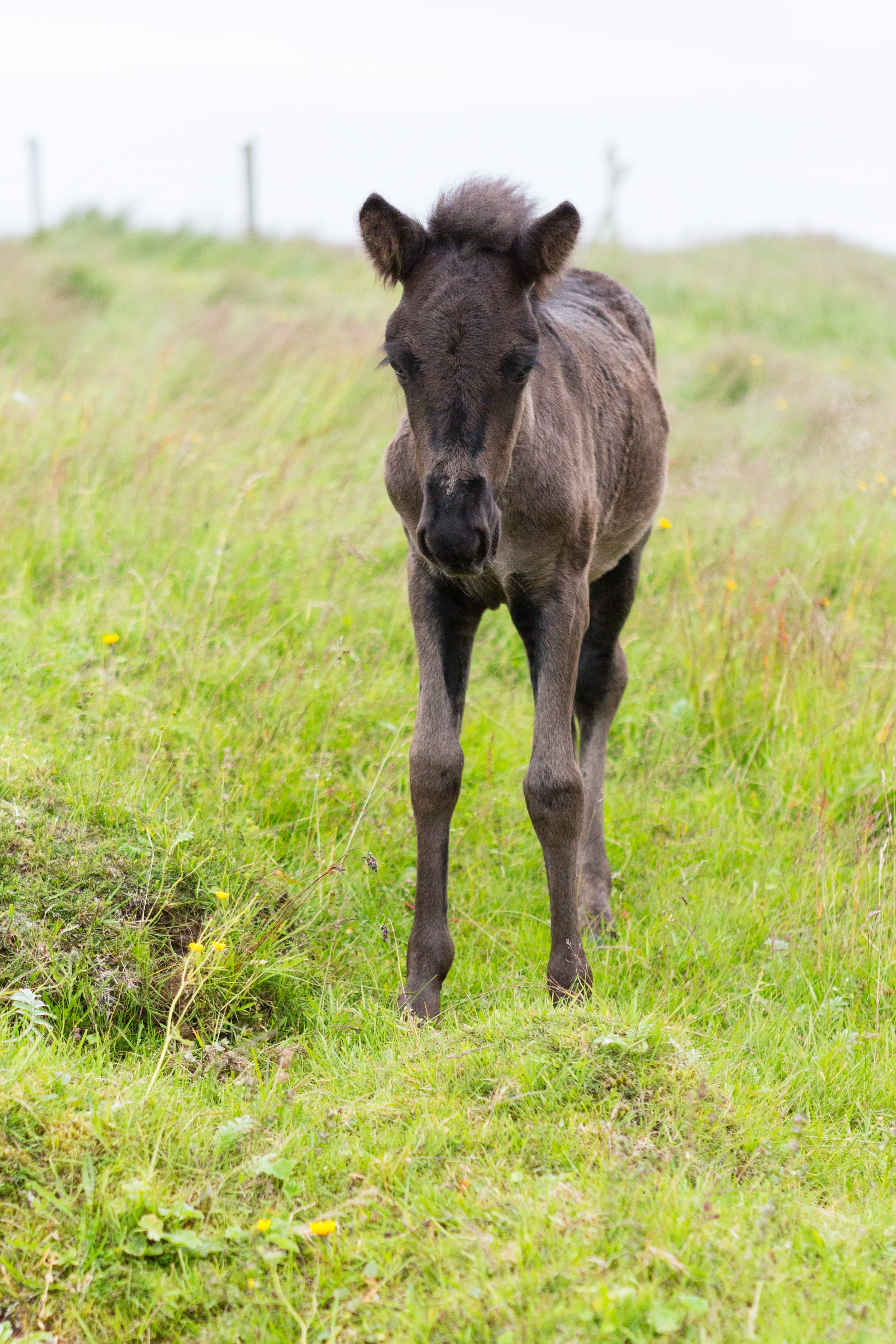 Horses in Iceland by Jen Madigan now on Cottage Hill27.jpg