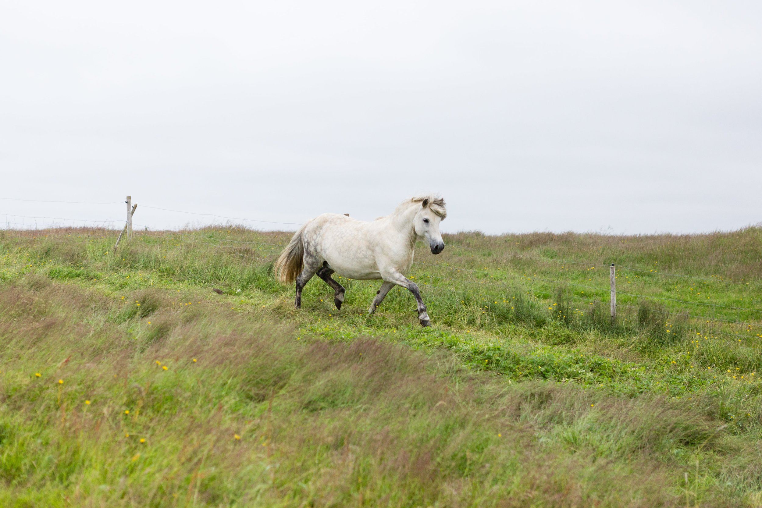 Horses in Iceland by Jen Madigan now on Cottage Hill30.jpg