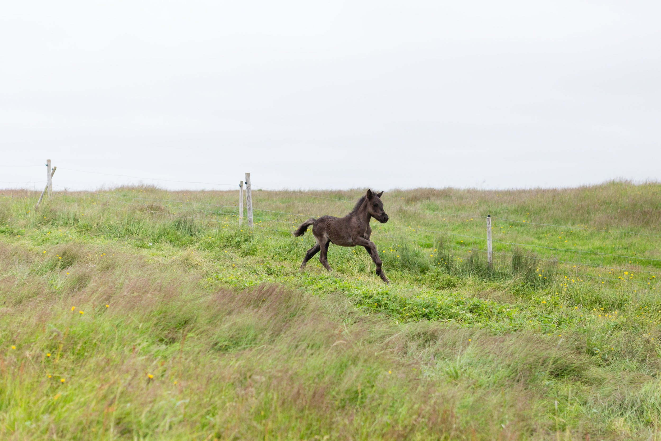 Horses in Iceland by Jen Madigan now on Cottage Hill31.jpg