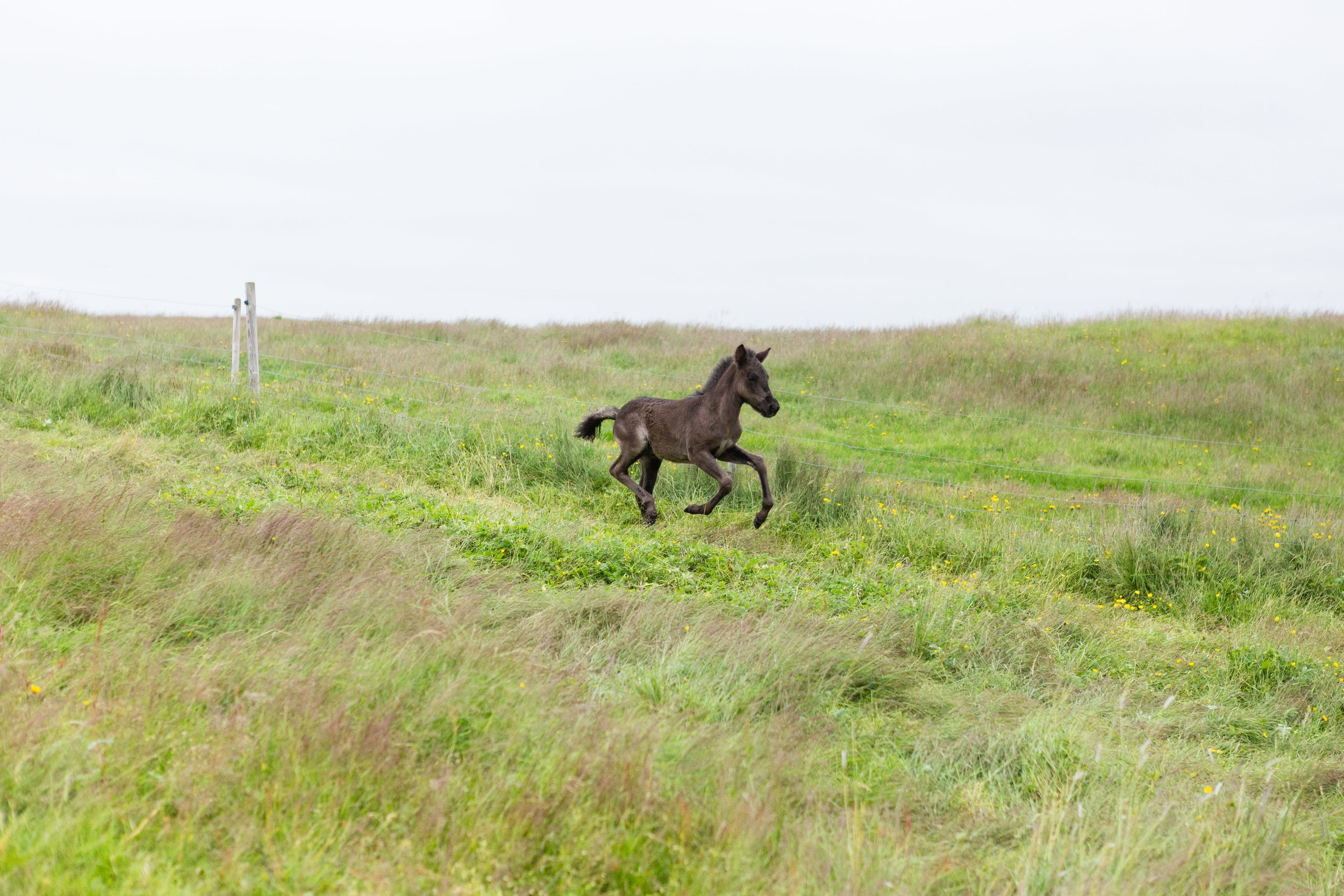 Horses in Iceland by Jen Madigan now on Cottage Hill32.jpg