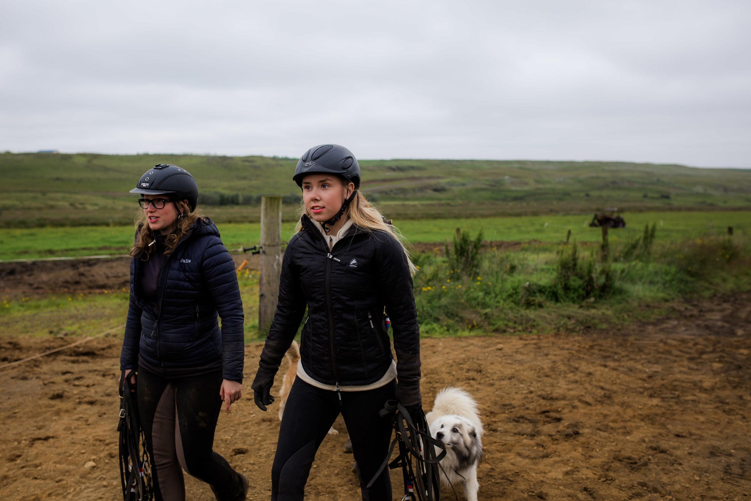 Horses in Iceland by Christina Swanson now on Cottage Hill20.jpg