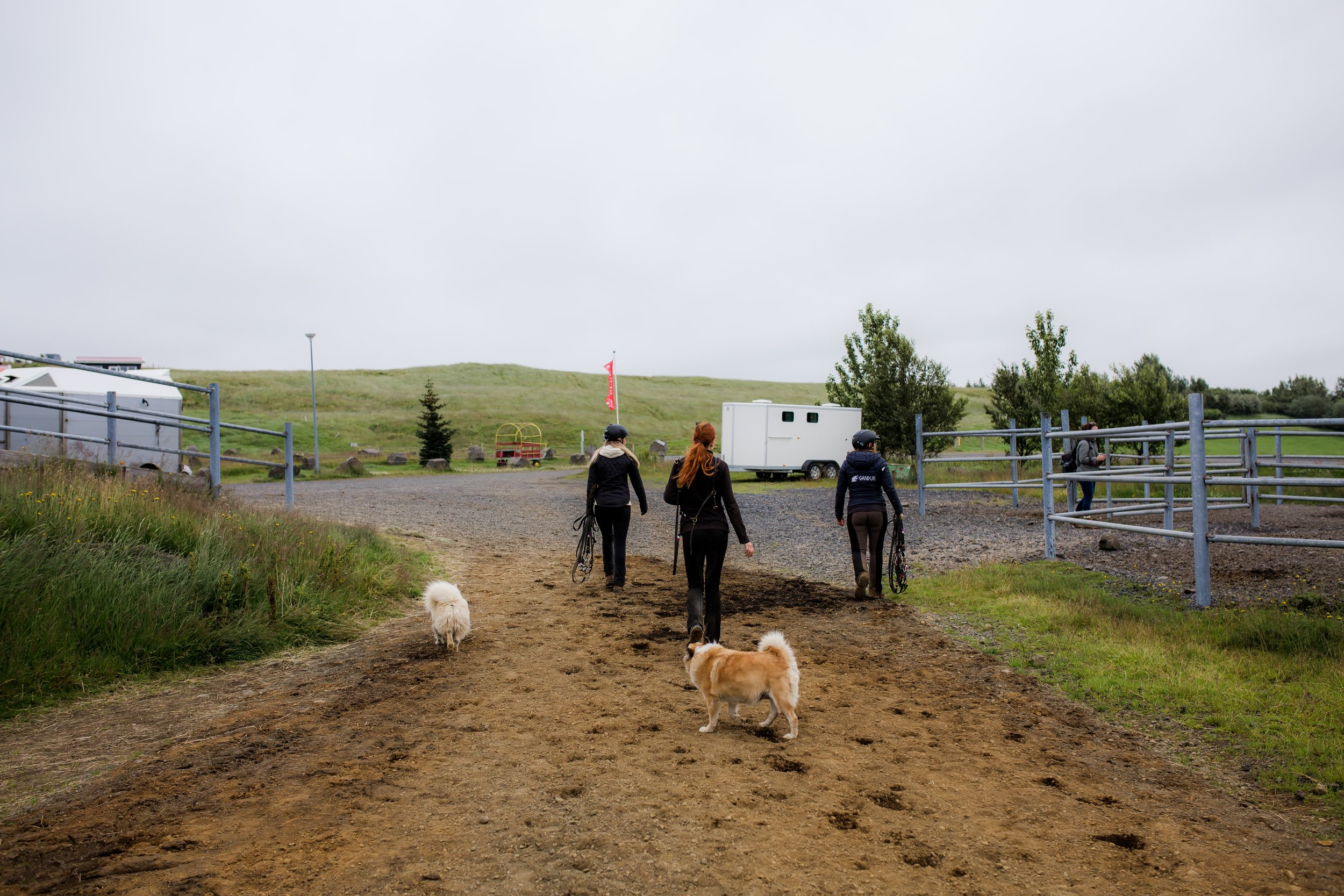 Horses in Iceland by Christina Swanson now on Cottage Hill21.jpg