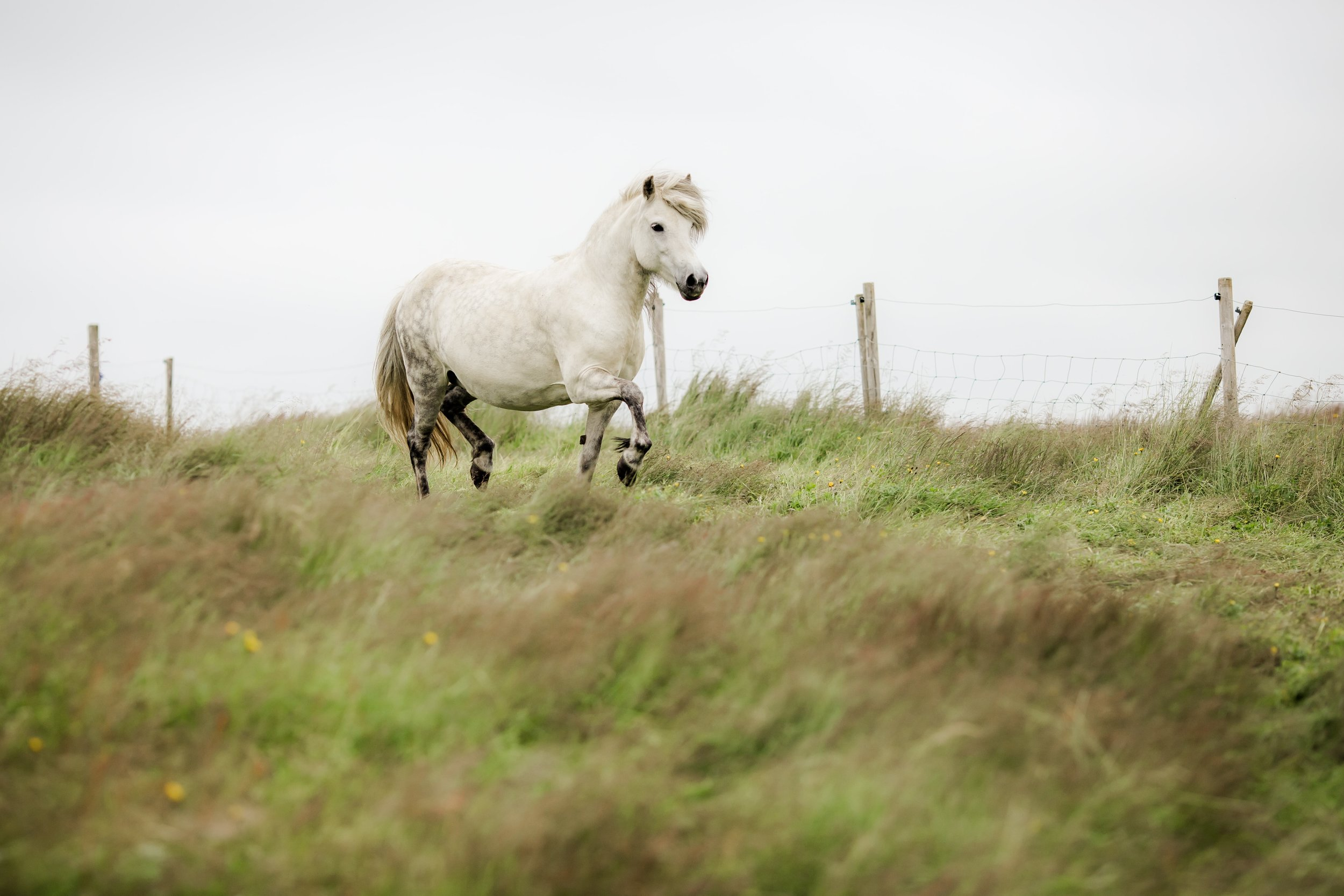 Horses in Iceland by Christina Swanson now on Cottage Hill25.jpg