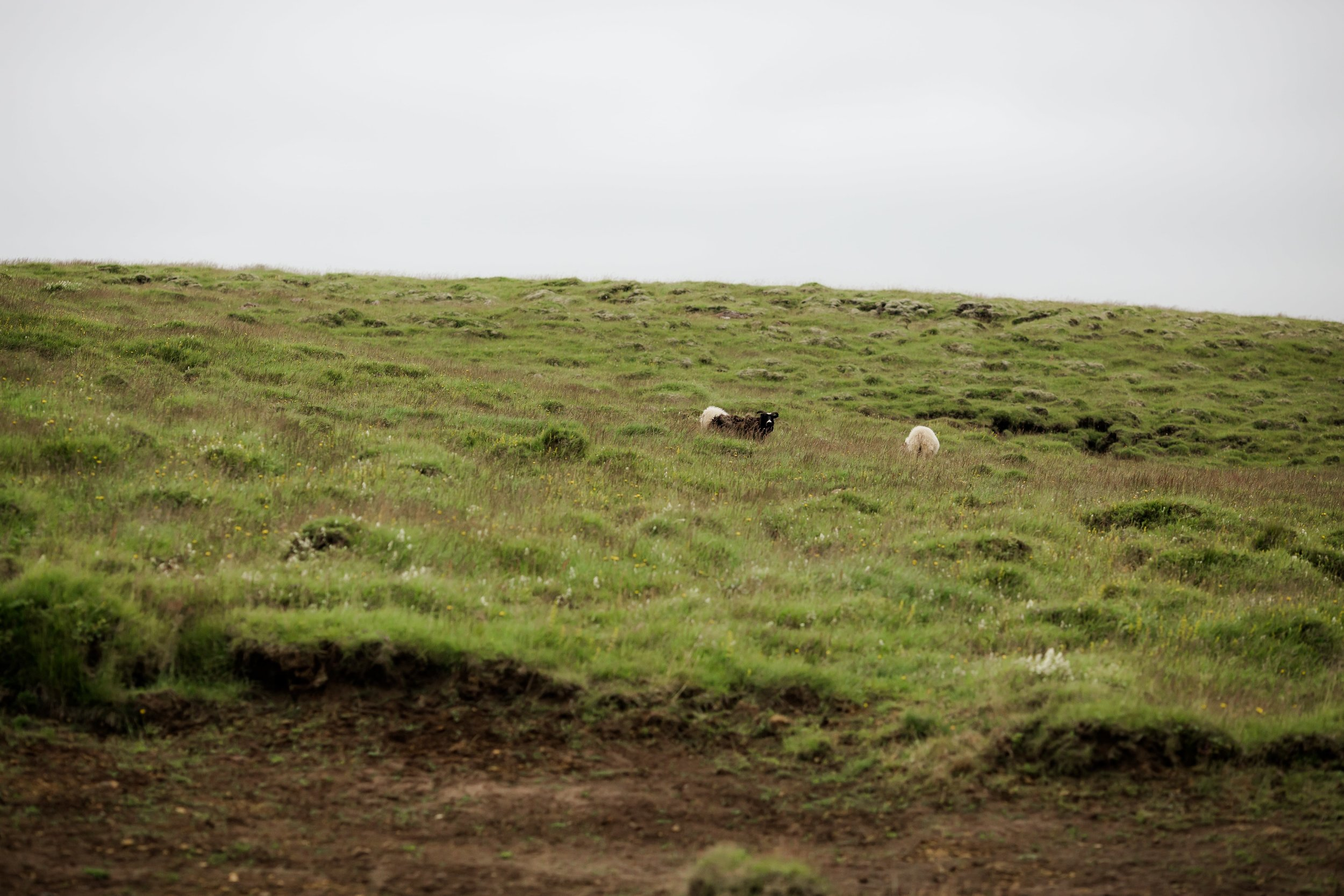 Horses in Iceland by Christina Swanson now on Cottage Hill71.jpg