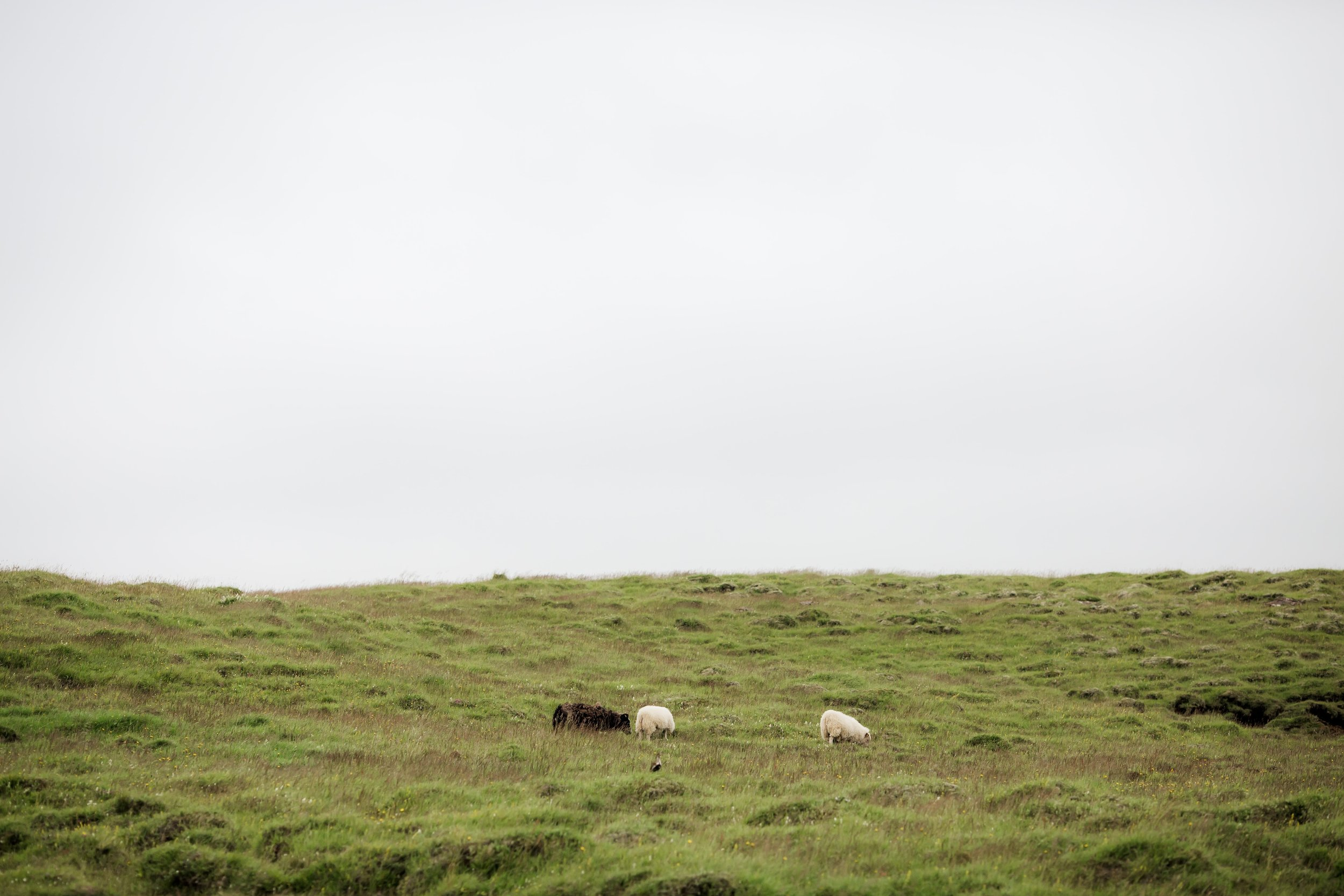 Horses in Iceland by Christina Swanson now on Cottage Hill72.jpg