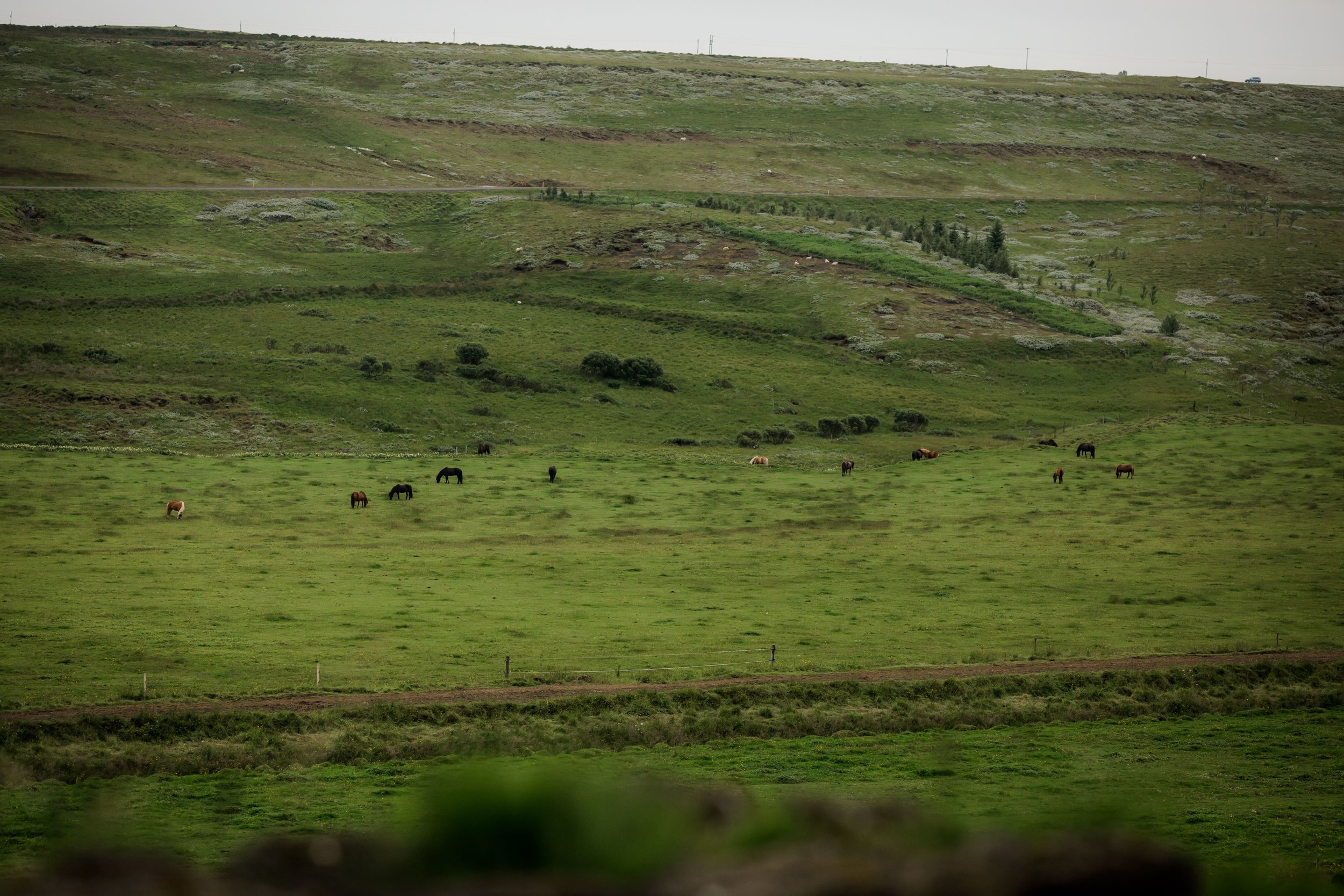 Horses in Iceland by Christina Swanson now on Cottage Hill78.jpg