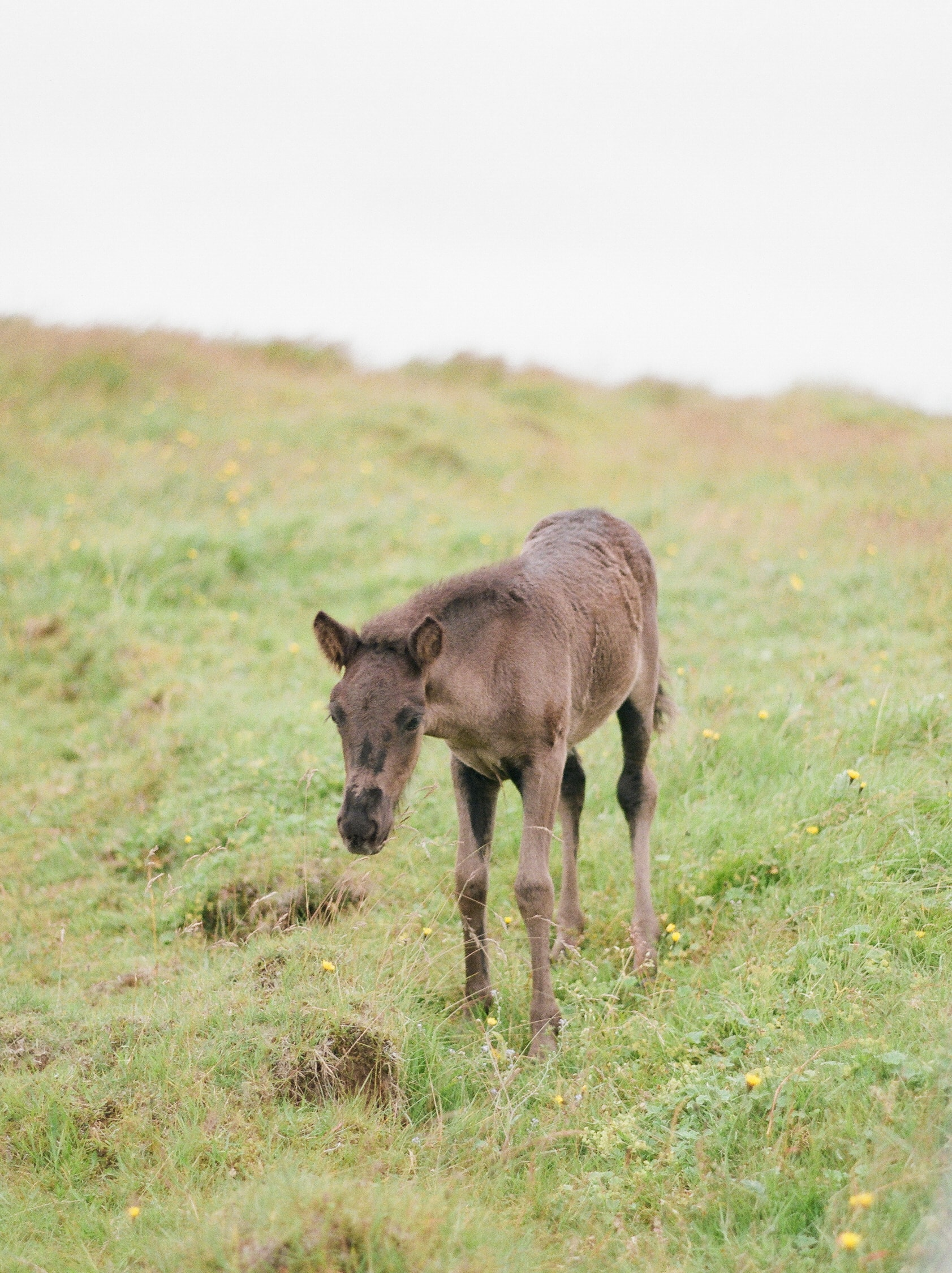 Horses in Iceland by Catherine Taylor now on Cottage Hill1.jpg