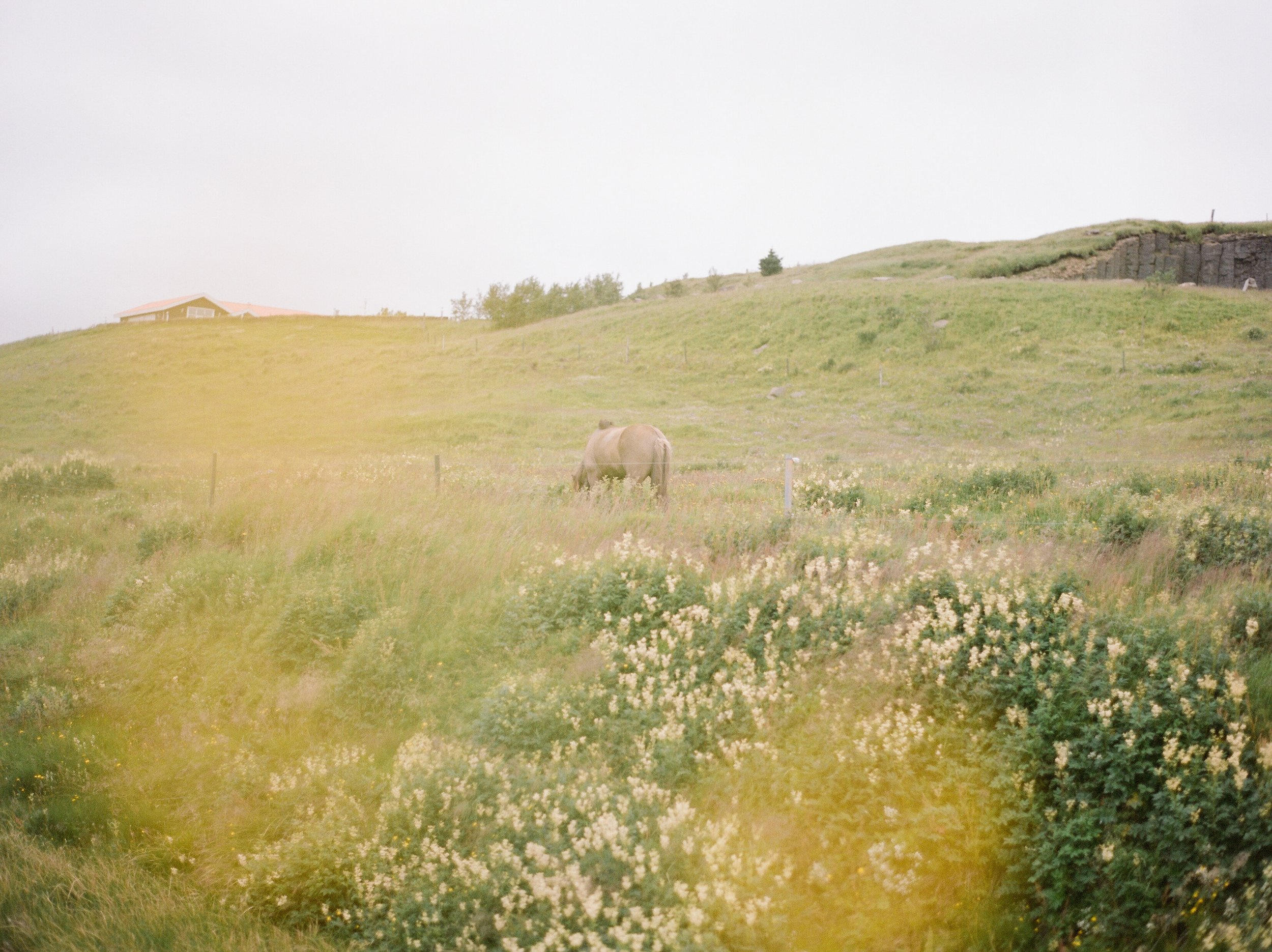 Horses in Iceland by Catherine Taylor now on Cottage Hill8.jpg