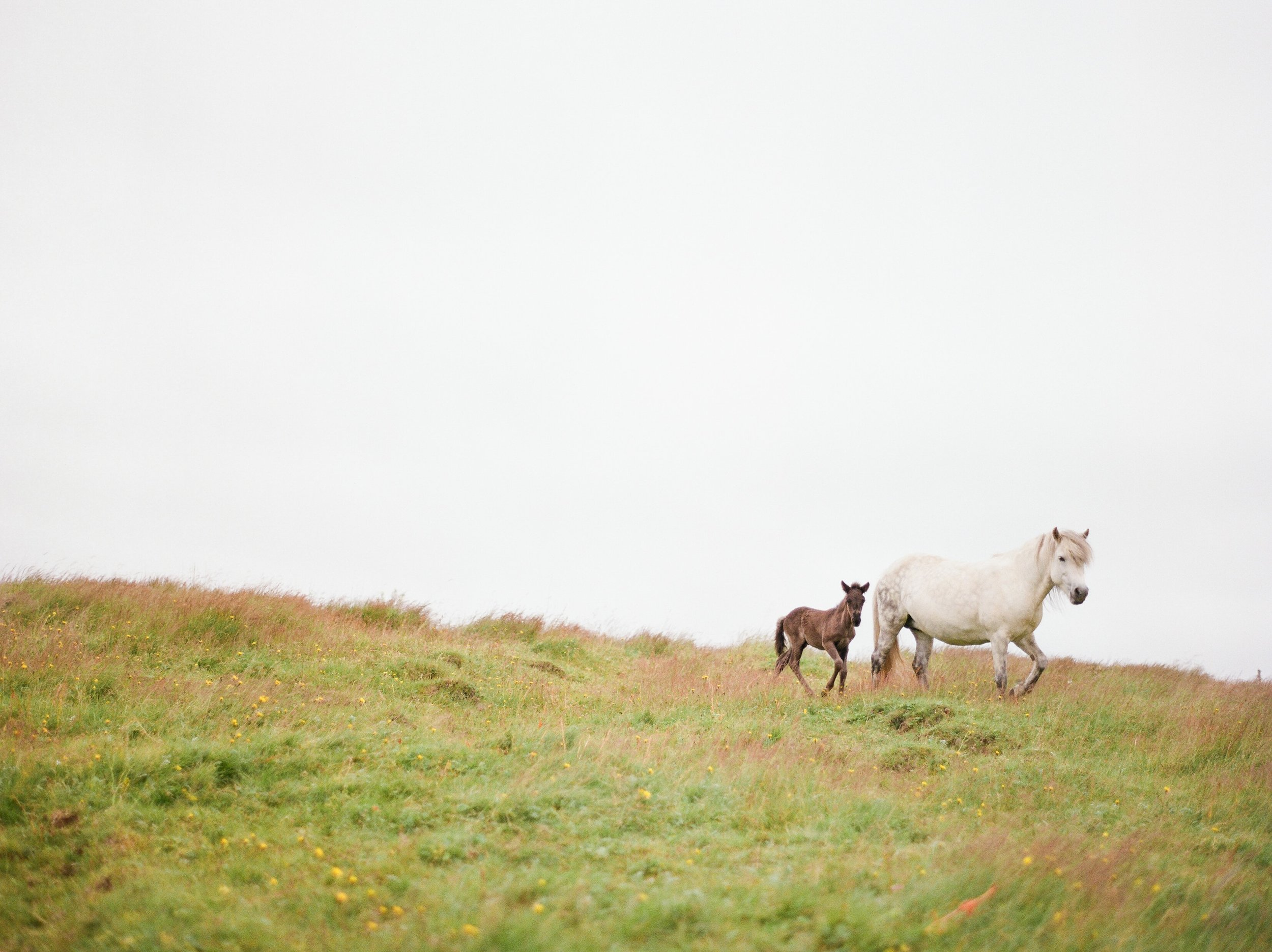 Horses in Iceland by Catherine Taylor now on Cottage Hill17.jpg