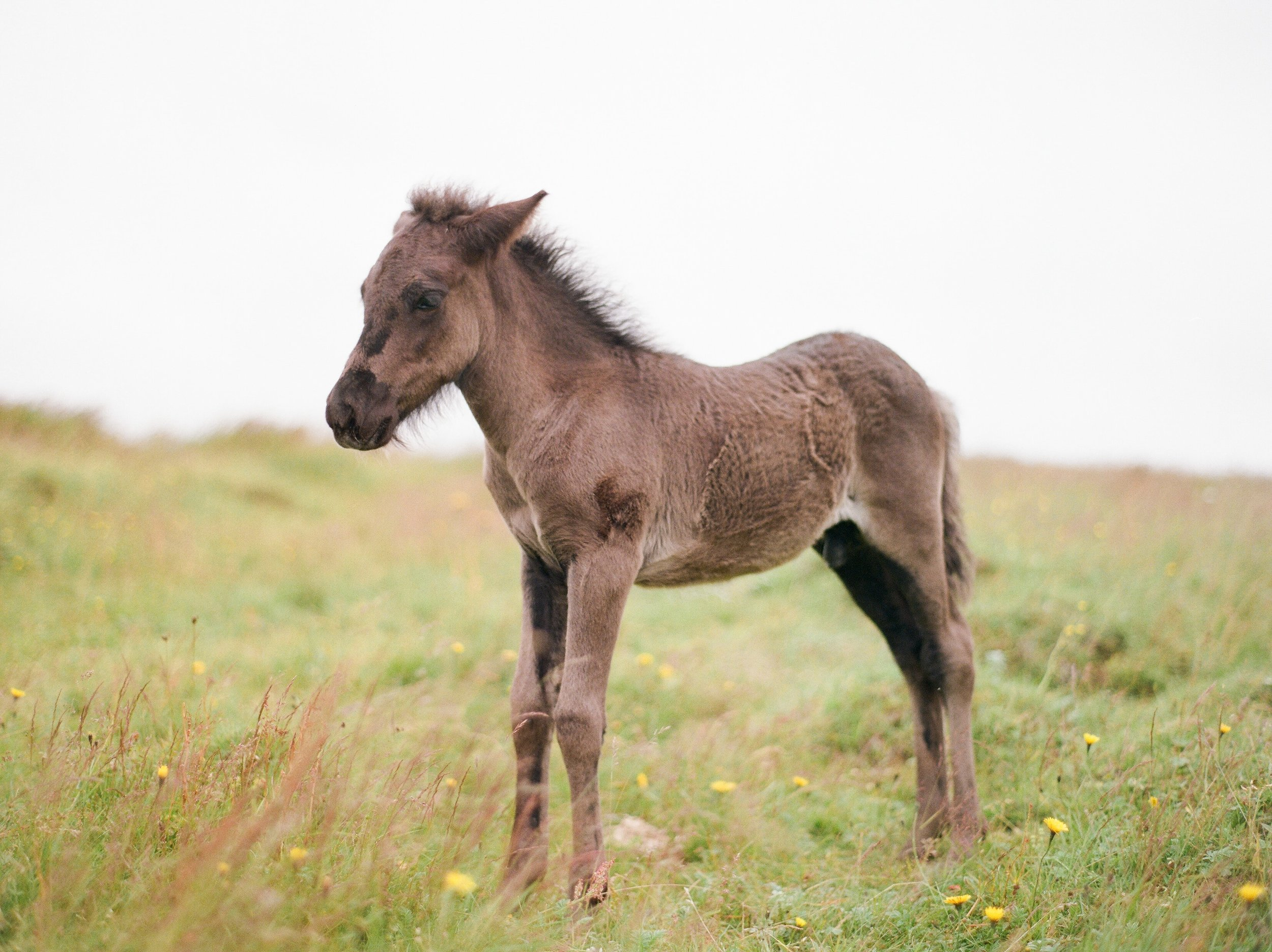Horses in Iceland by Catherine Taylor now on Cottage Hill18.jpg