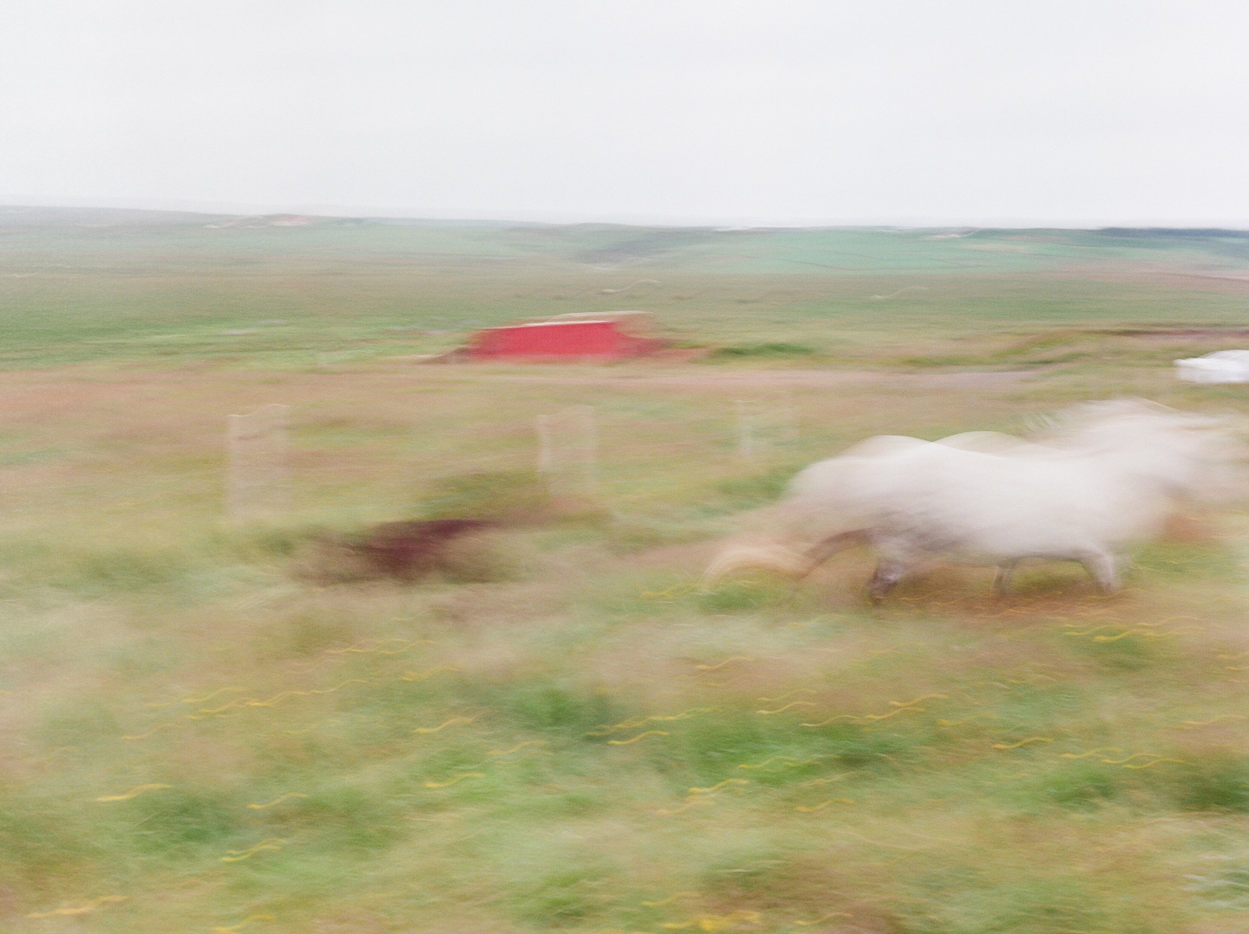 Horses in Iceland by Catherine Taylor now on Cottage Hill19.jpg