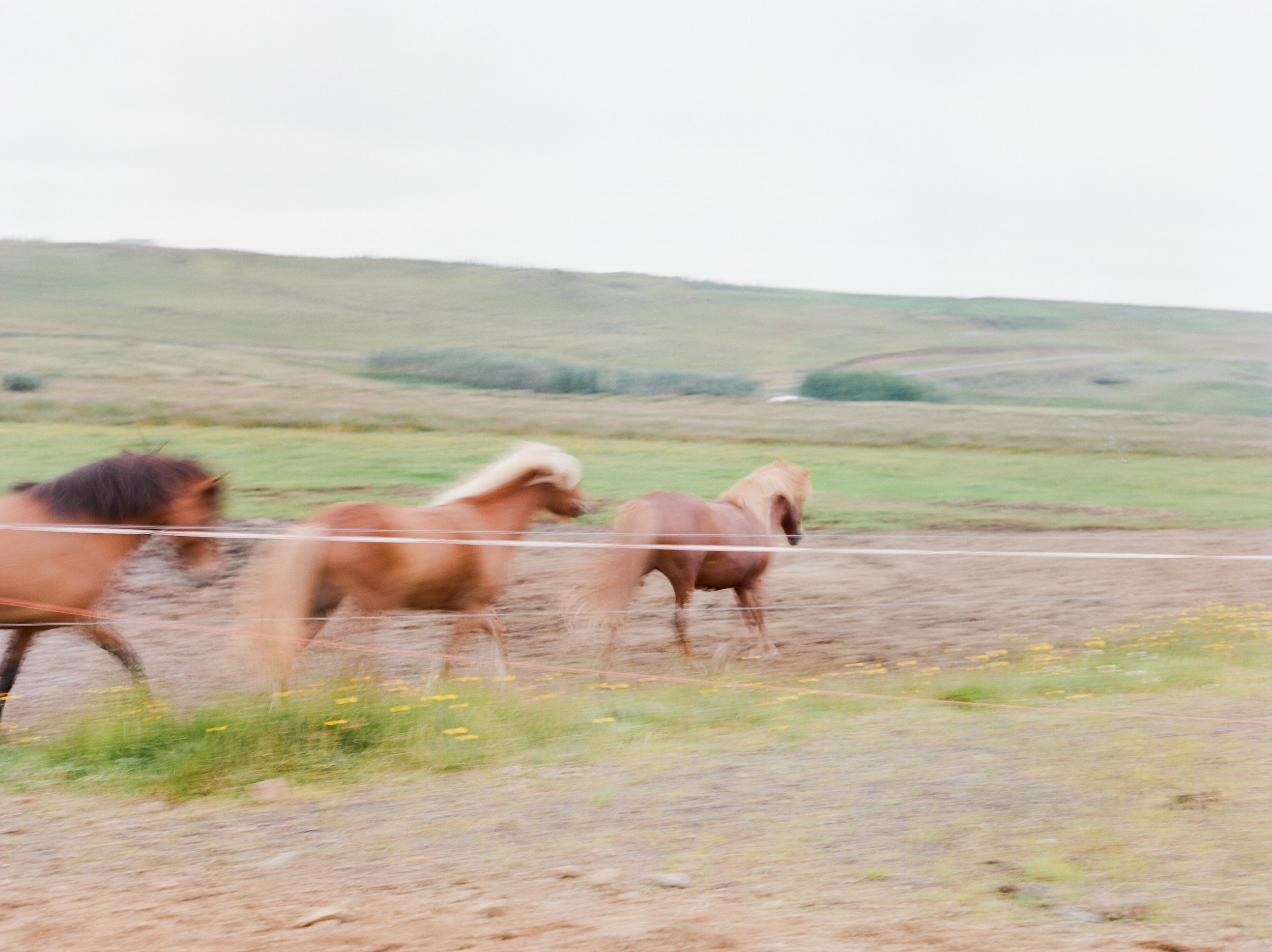 Horses in Iceland by Catherine Taylor now on Cottage Hill24.jpg