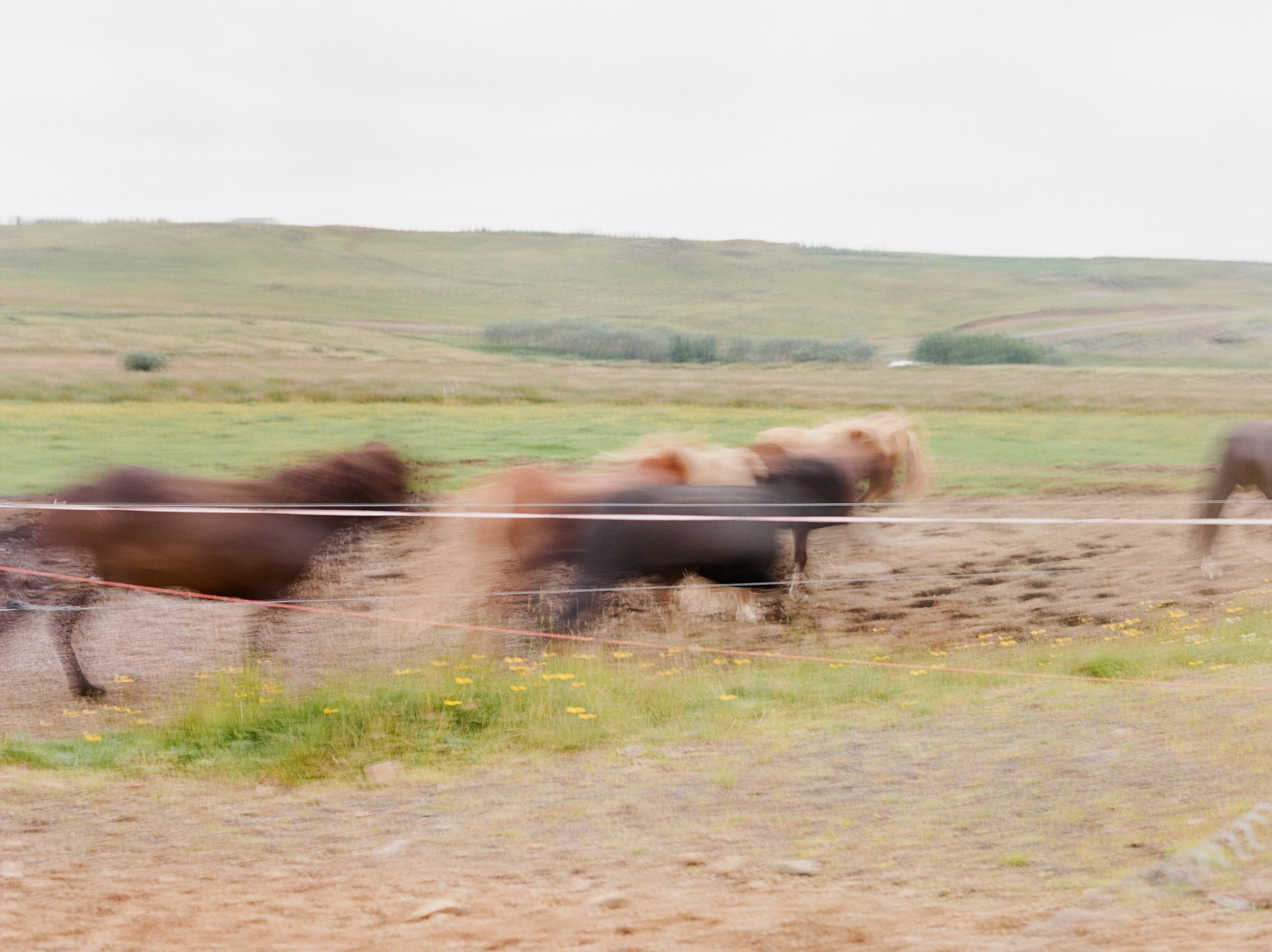 Horses in Iceland by Catherine Taylor now on Cottage Hill25.jpg