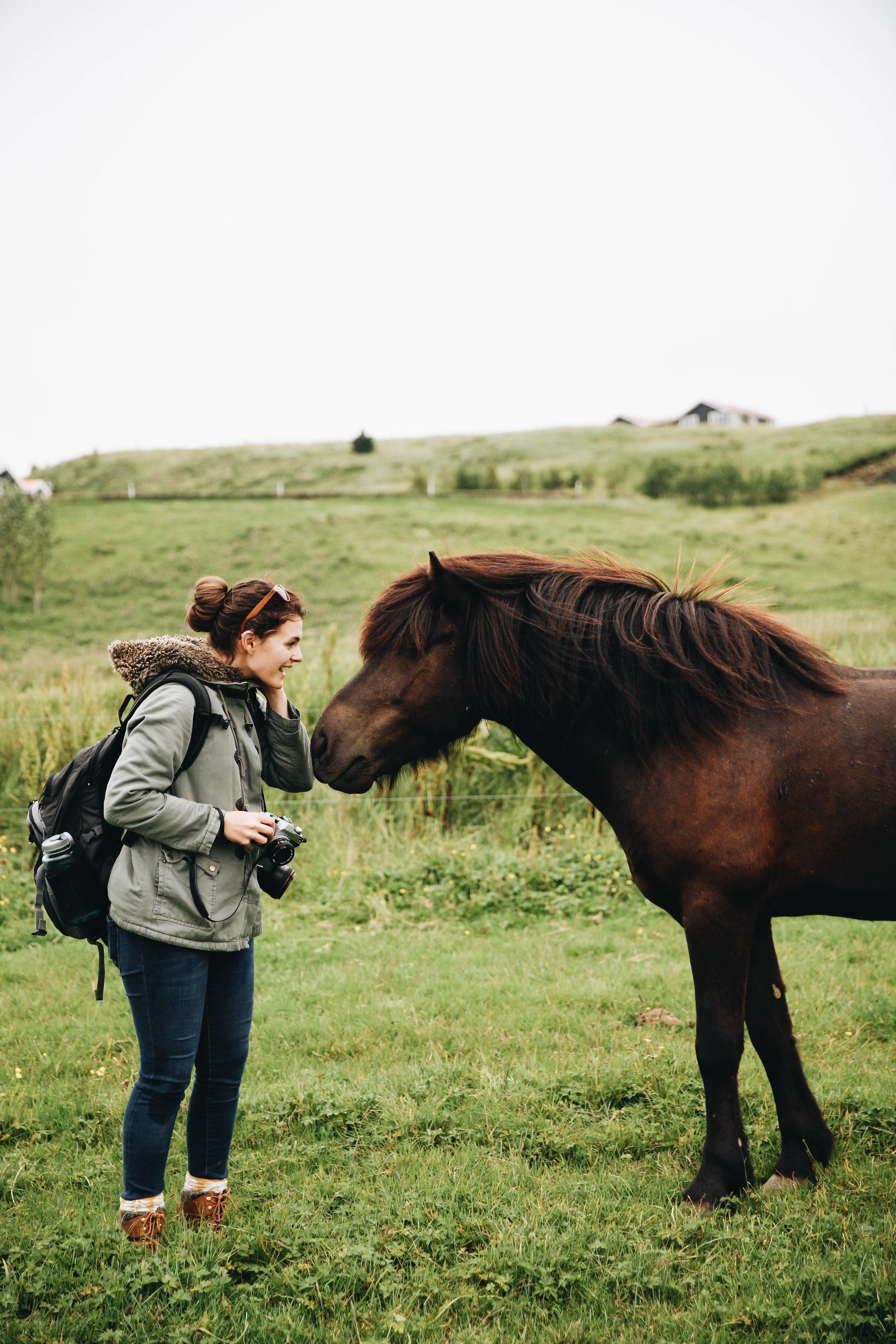 Horses in Iceland by Jessie Watts now on Cottage Hill1.jpg