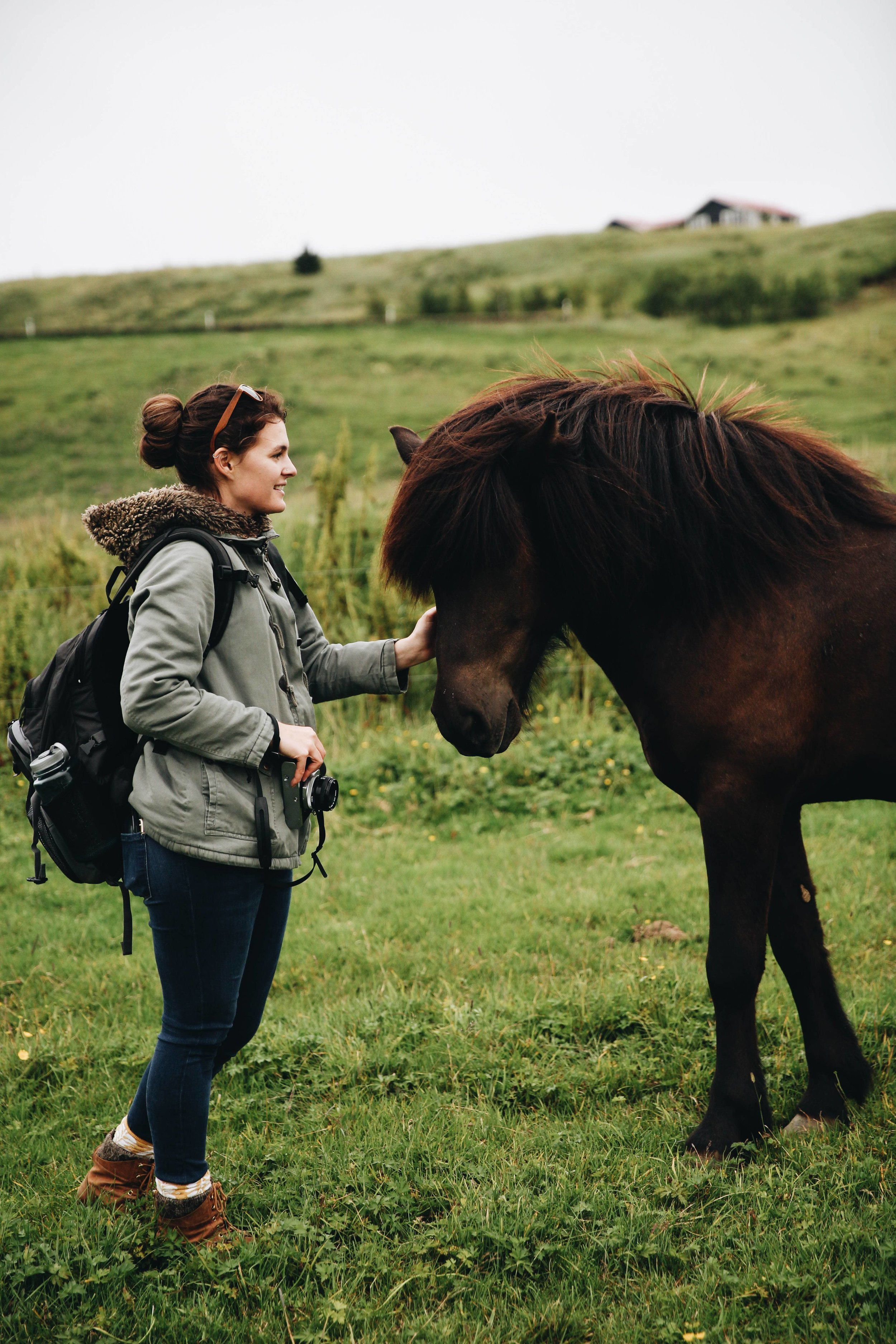 Horses in Iceland by Jessie Watts now on Cottage Hill5.jpg