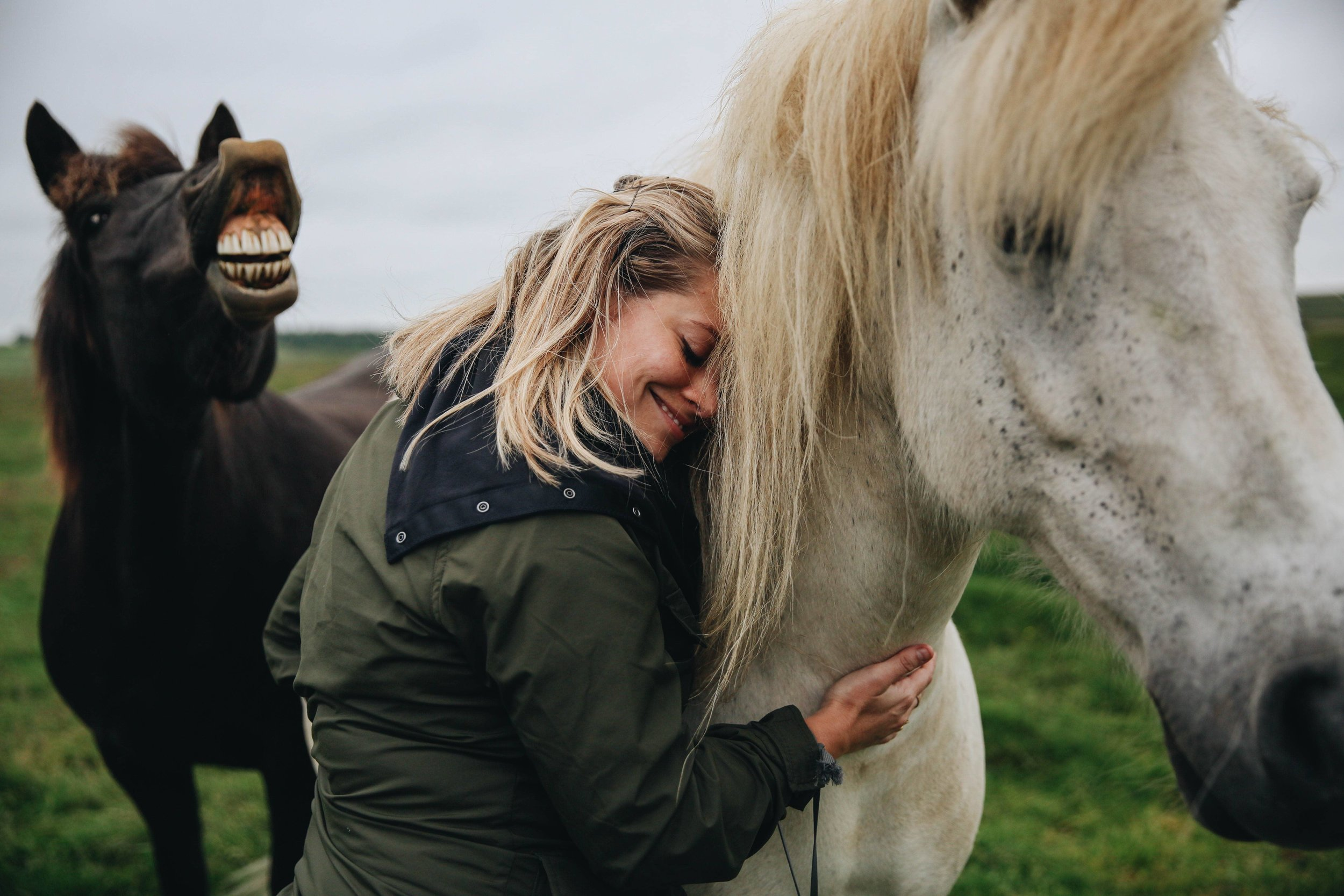 Horses in Iceland by Jessie Watts now on Cottage Hill7.jpg
