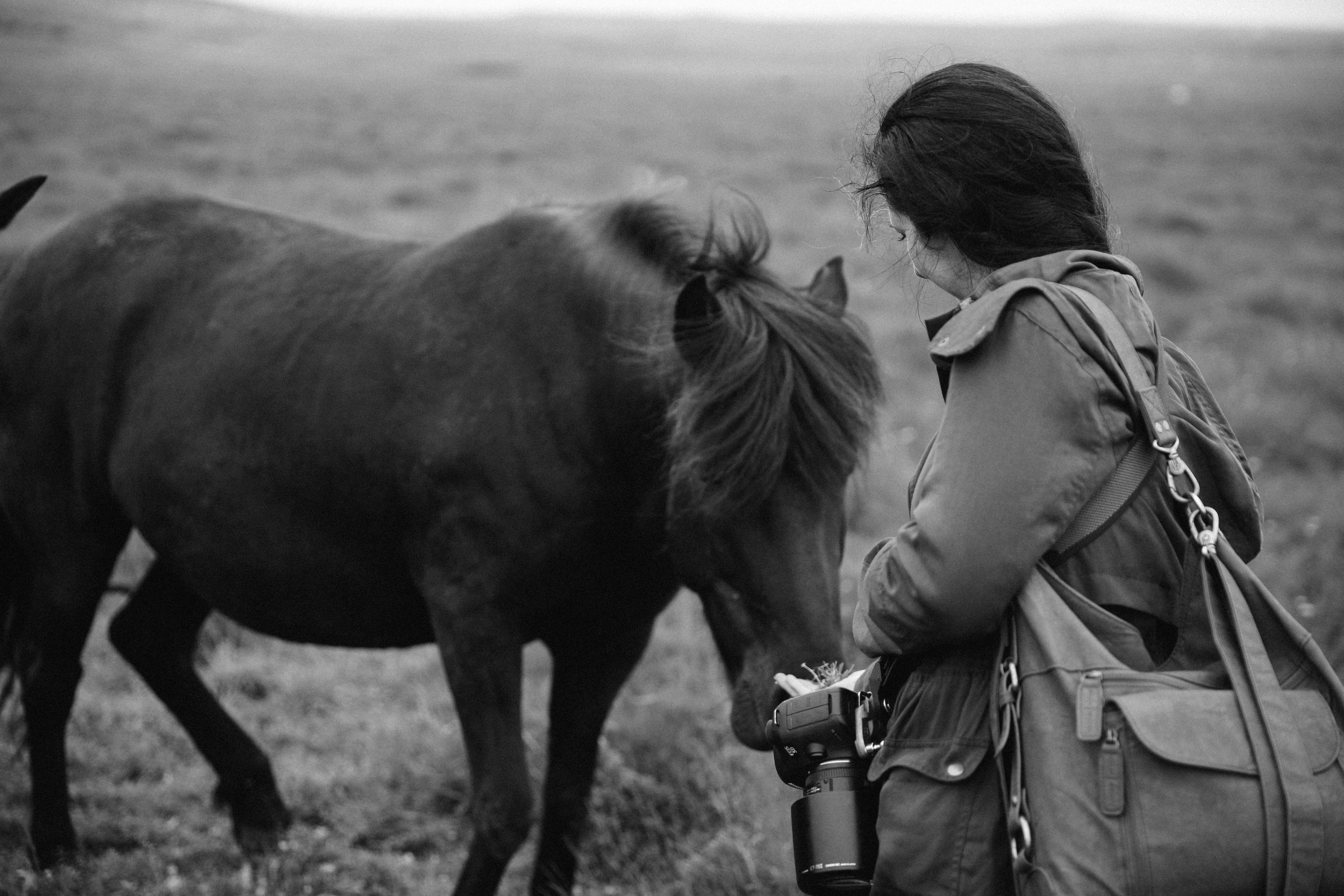 Horses in Iceland by Jessie Watts now on Cottage Hill13.jpg