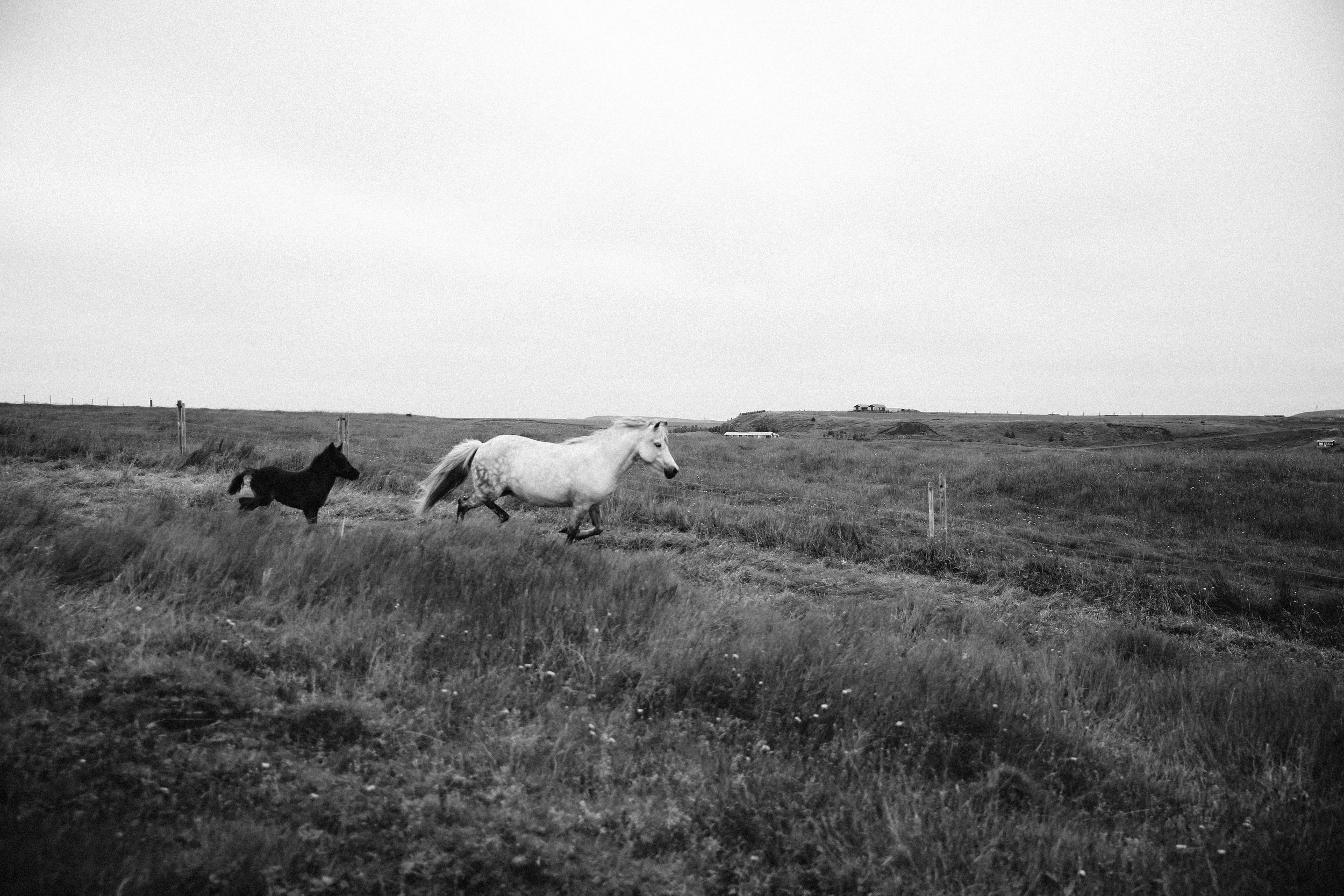 Horses in Iceland by Jessie Watts now on Cottage Hill12.jpg