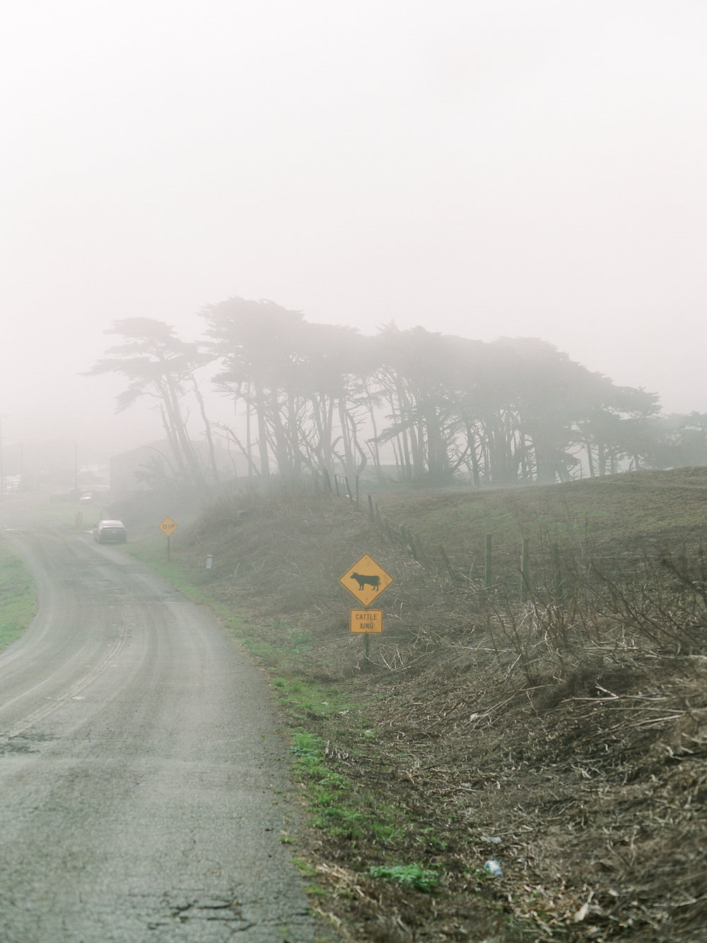 Winter in California on Cottage Hill | cottagehill.co1.jpg