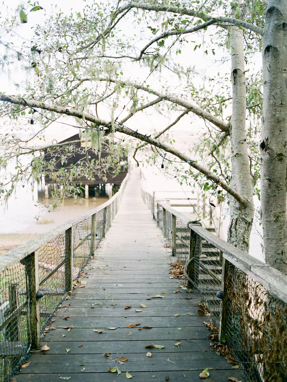 Winter in California on Cottage Hill | cottagehill.co9.jpg