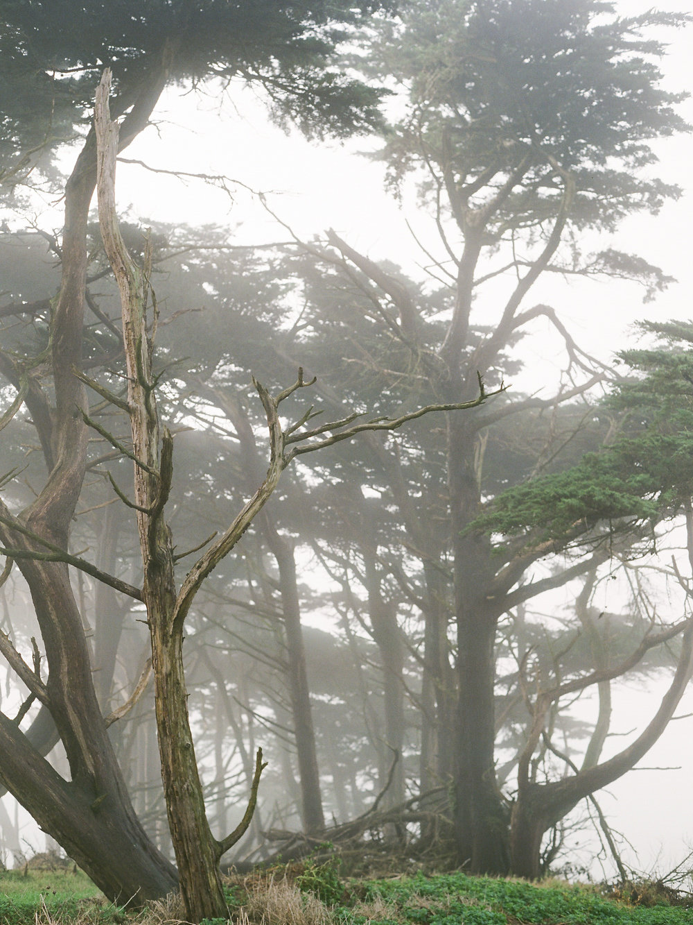 Winter in California on Cottage Hill | cottagehill.co17.jpg