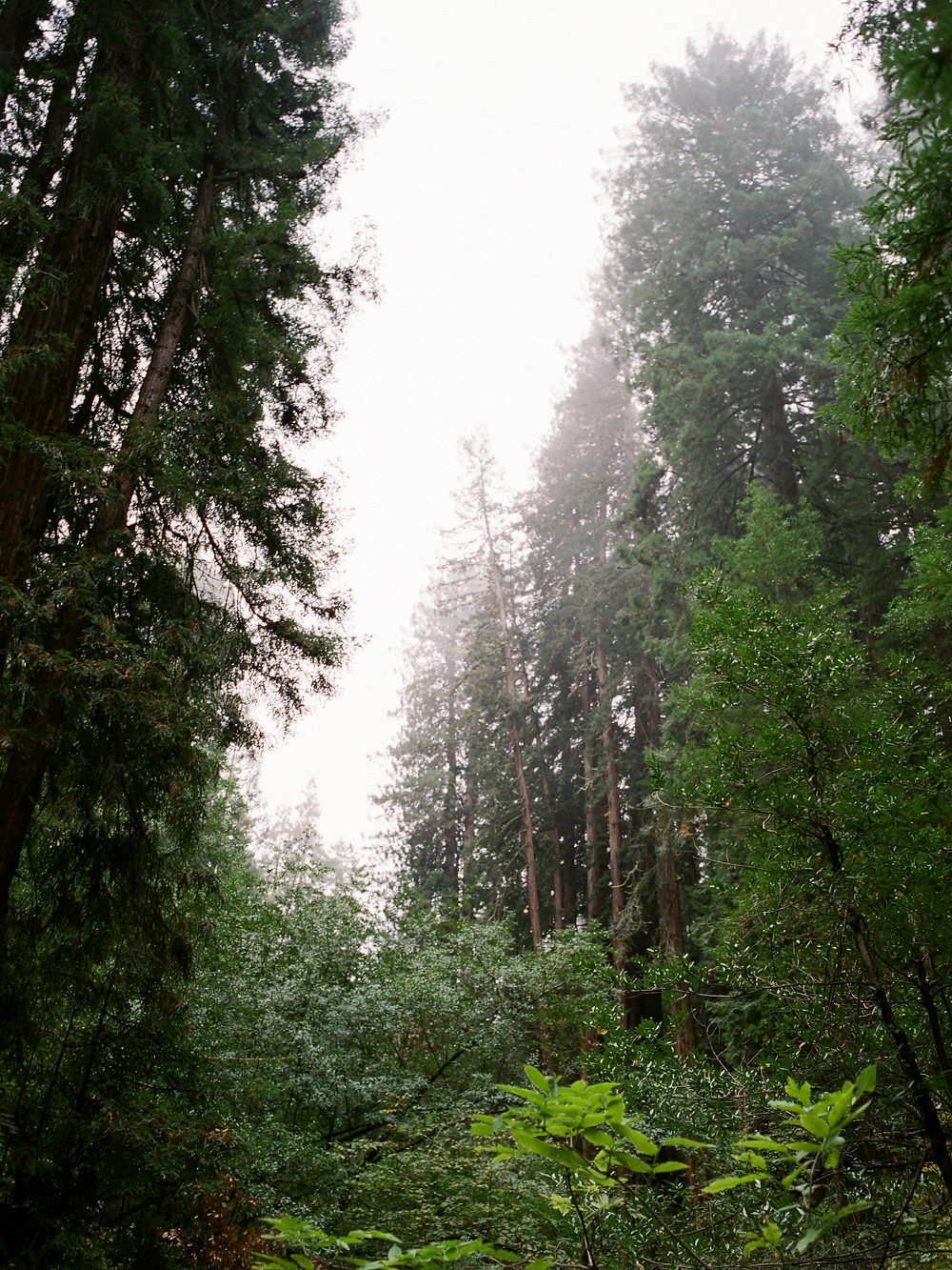 Winter in California on Cottage Hill | cottagehill.co27.jpg
