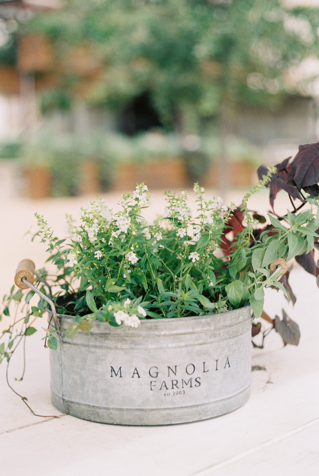 The 7 Things You Must Do at Magnolia Market on Cottage HIll | cottagehill.co33.jpg