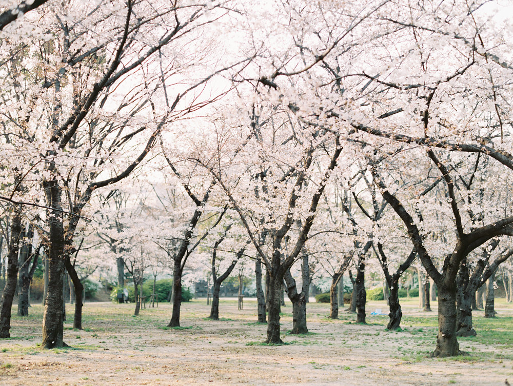 The Best of Travel in Japan now on Cottage Hill | cottagehill.co23.jpg