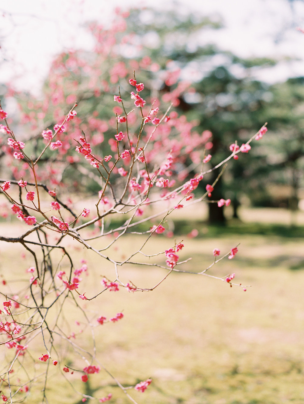 The Best of Travel in Japan now on Cottage Hill | cottagehill.co36.jpg