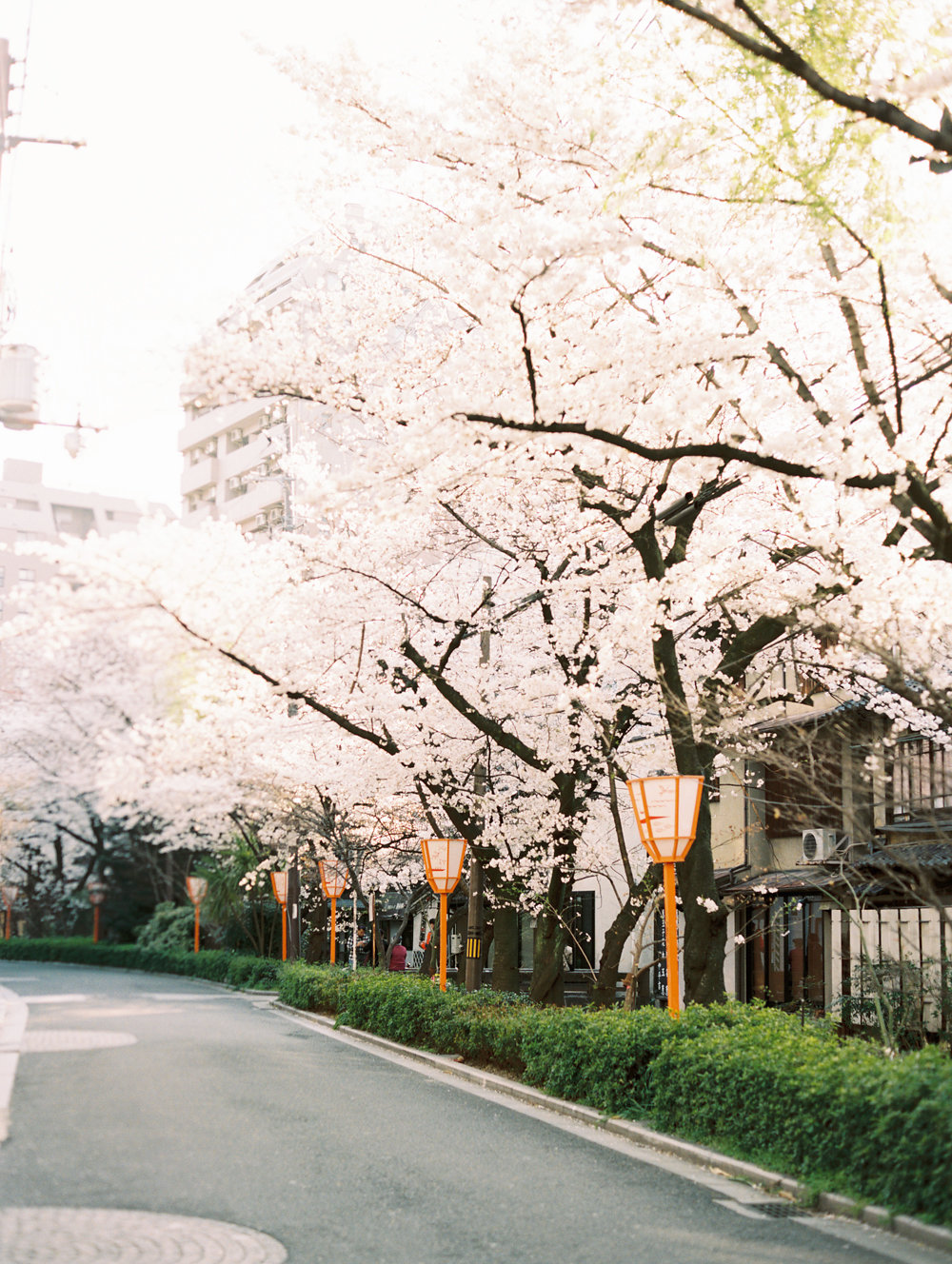 The Best of Travel in Japan now on Cottage Hill | cottagehill.co74.jpg