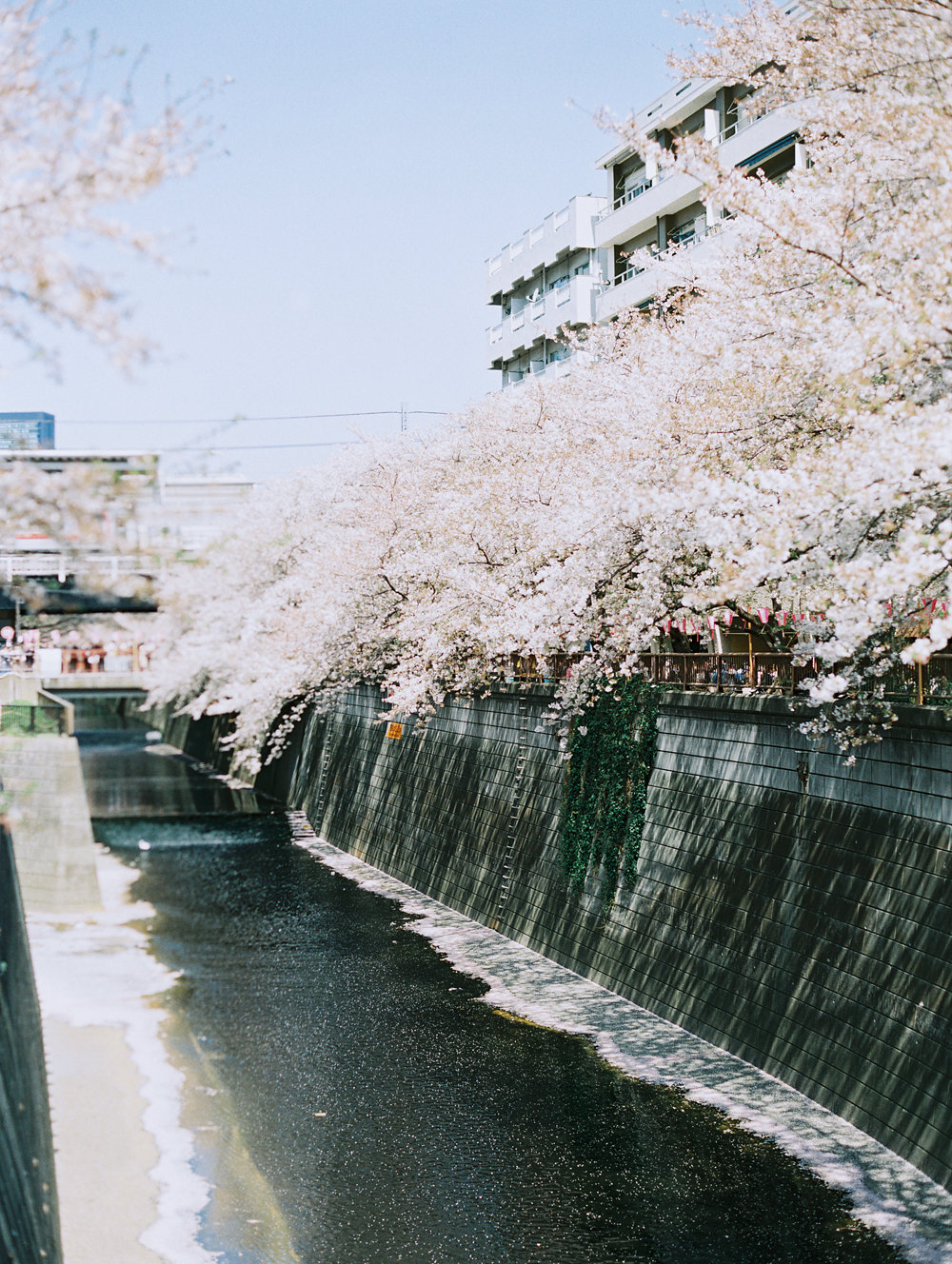 The Best of Travel in Japan now on Cottage Hill | cottagehill.co96.jpg
