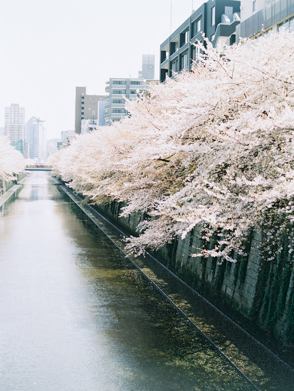 The Best of Travel in Japan now on Cottage Hill | cottagehill.co107.jpg