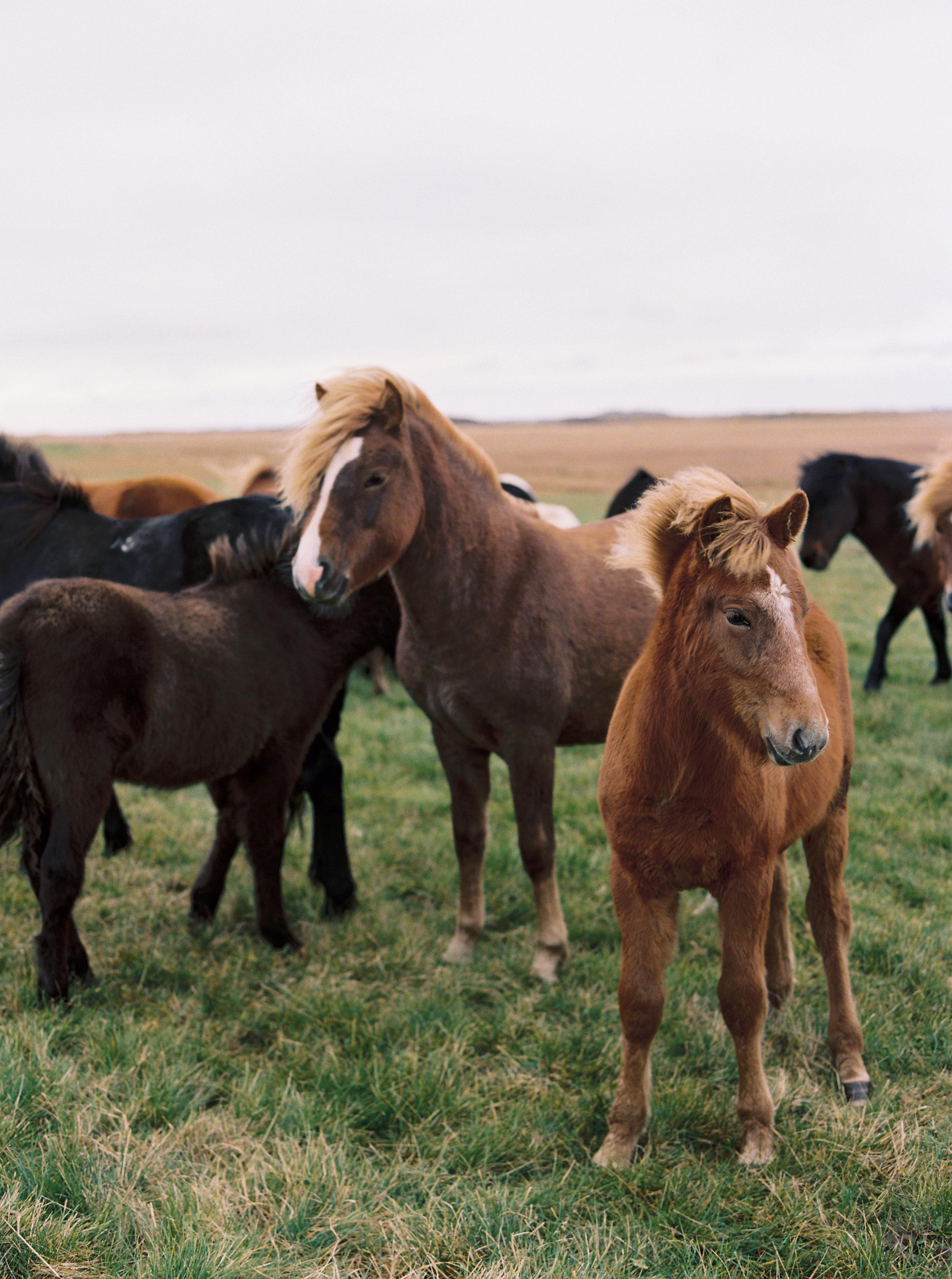 © Cottage Hill, LLC | Iceland Elopement | cottagehill.co19.jpg