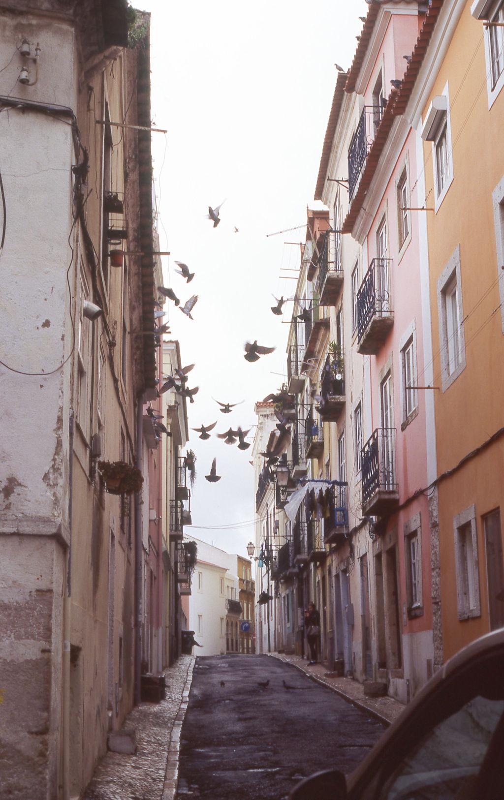 © Cottage Hill, LLC | cottagehill.co | Lisbon on Film28.jpg