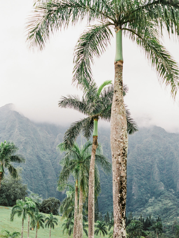 © Cottage Hill, LLC | cottagehill.co | Hawaii on Film6.jpg