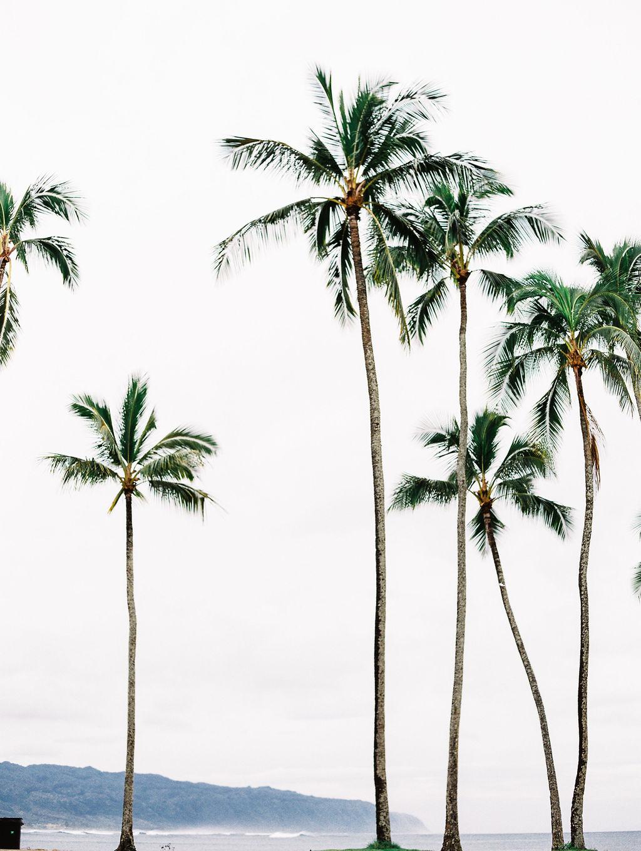 © Cottage Hill, LLC | cottagehill.co | Hawaii on Film17.jpg