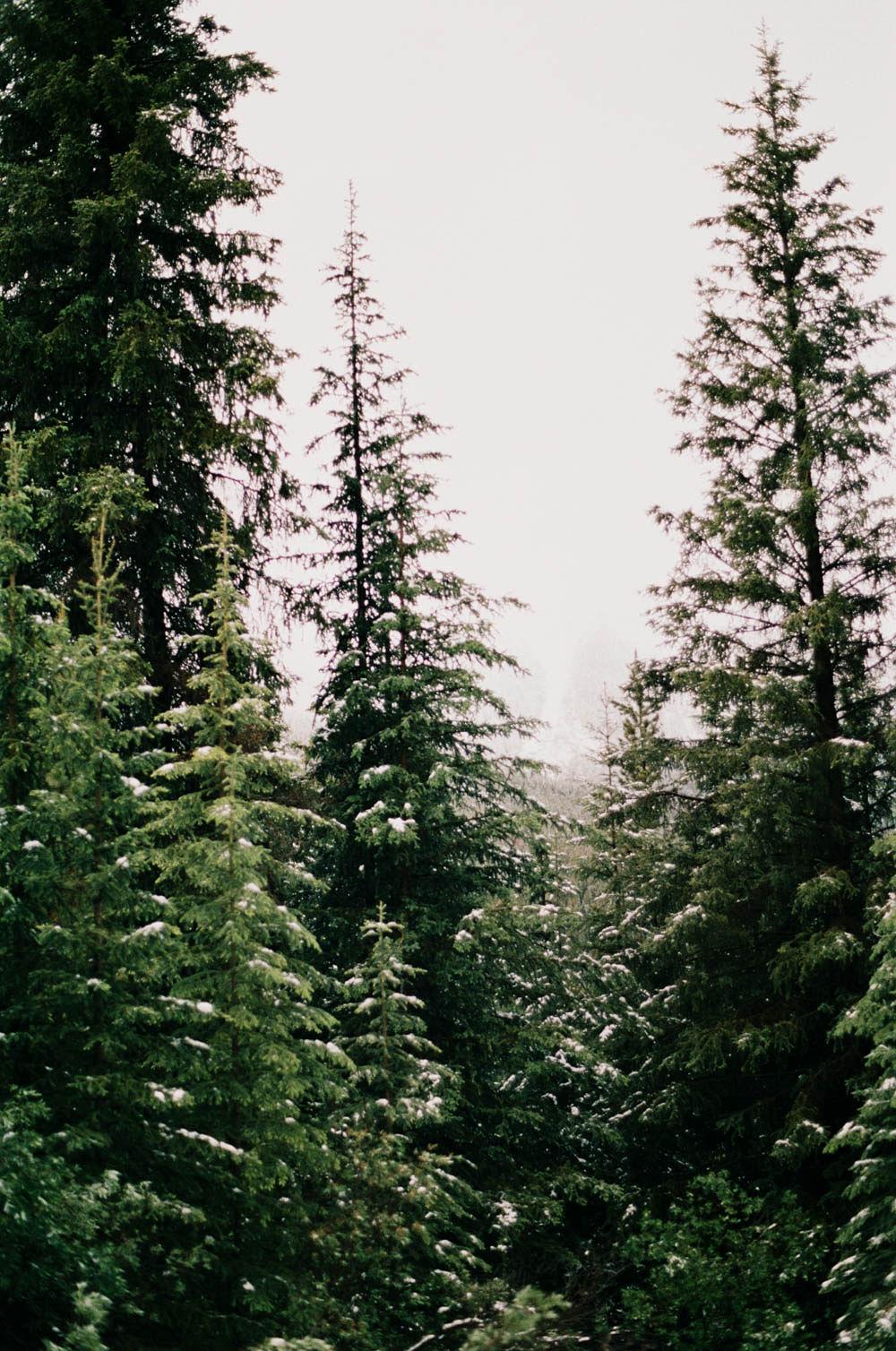 © Cottage Hill, LLC | cottagehill.co | Canadian Rockies23.jpg