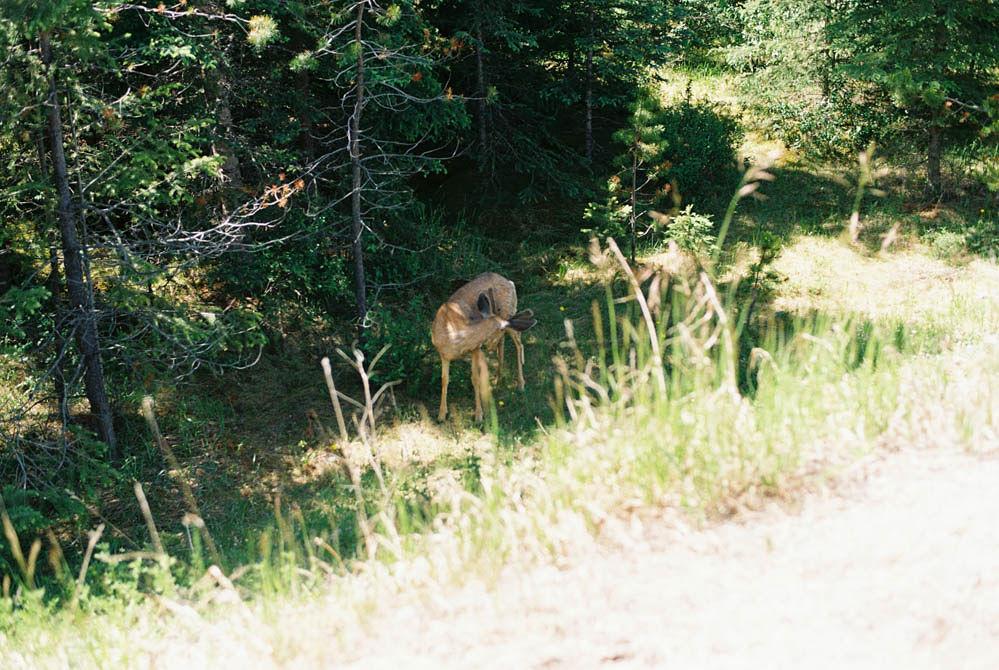 © Cottage Hill, LLC | cottagehill.co | Canadian Rockies46.jpg