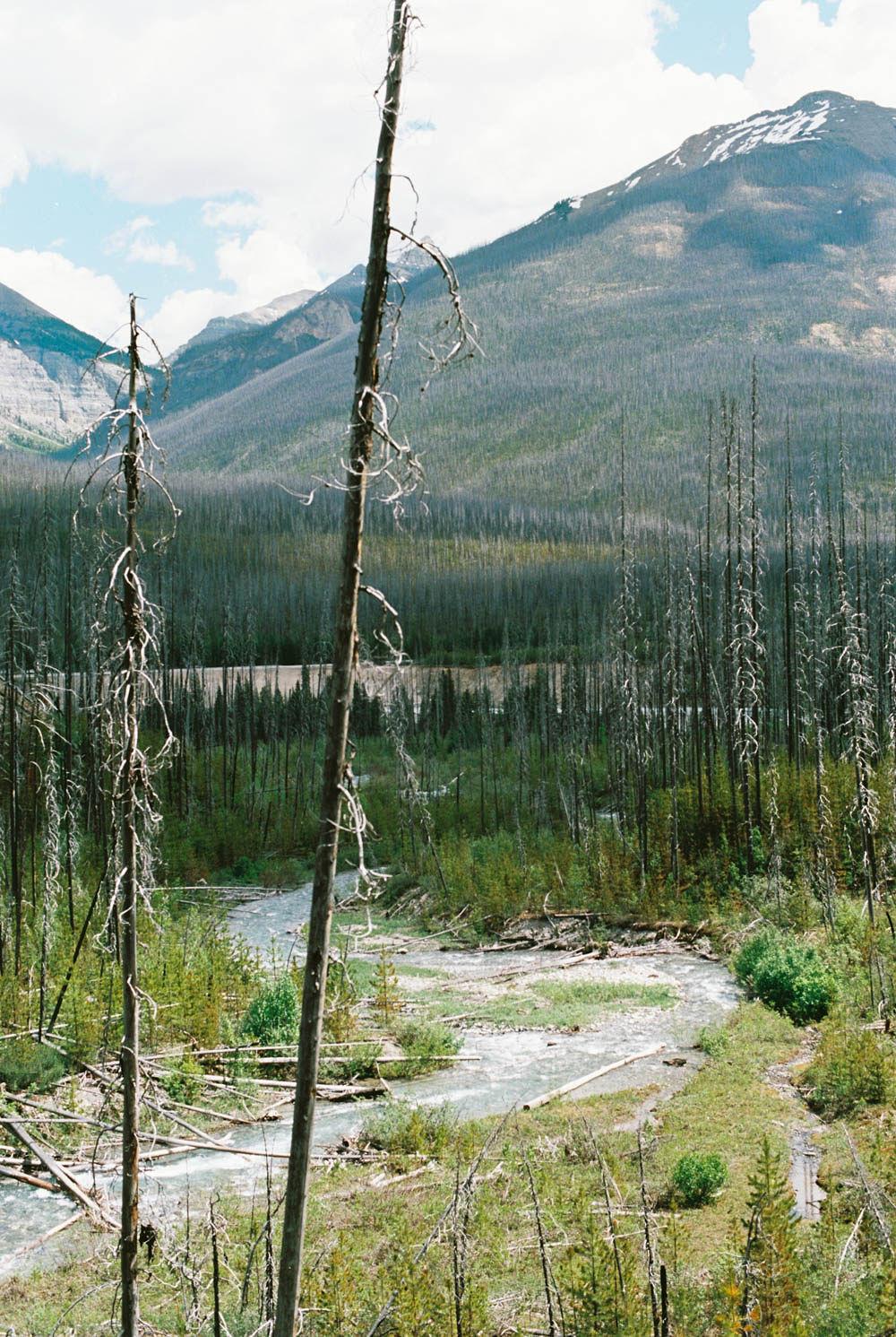© Cottage Hill, LLC | cottagehill.co | Canadian Rockies66.jpg