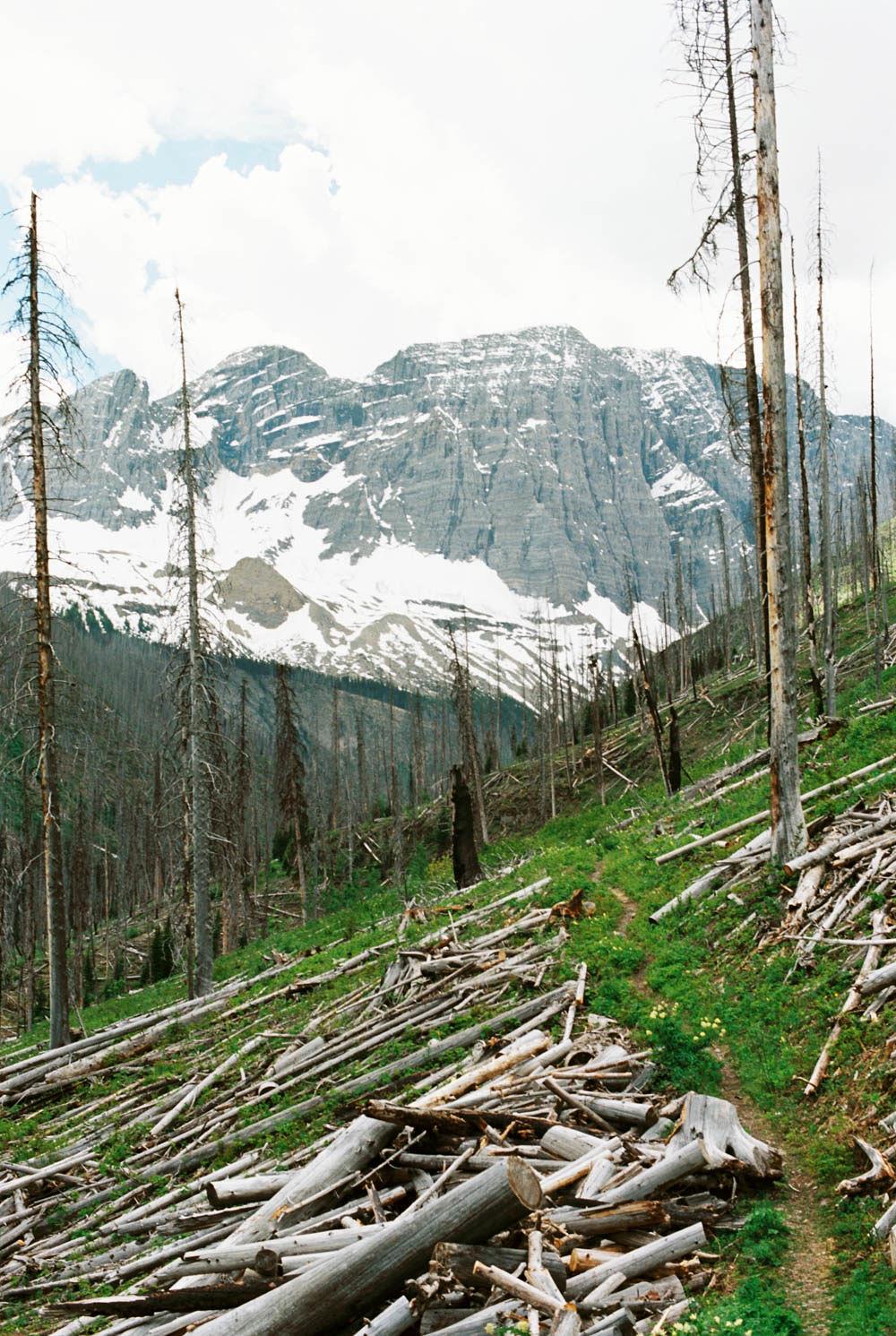 © Cottage Hill, LLC | cottagehill.co | Canadian Rockies67.jpg
