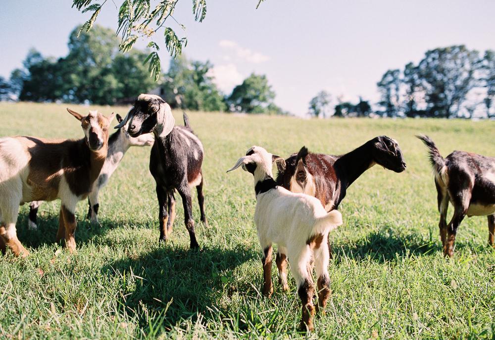 © Cottage Hill, LLC   cottagehill.co   Rose Lane Farm90.jpg