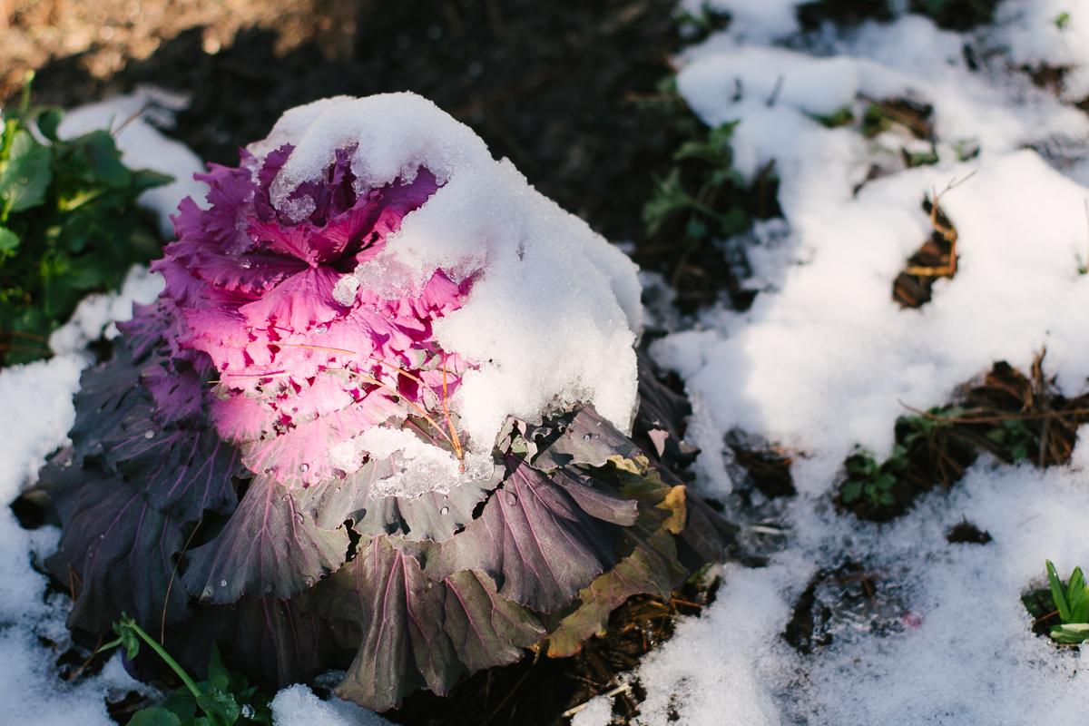 Gemlike Wet Snow