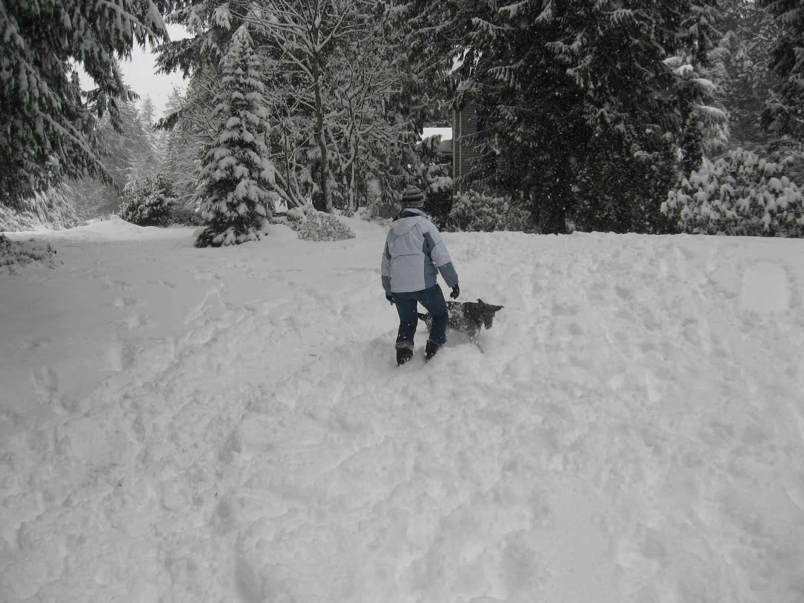 Thea & Toki in the snow in Woodinville, WA.
