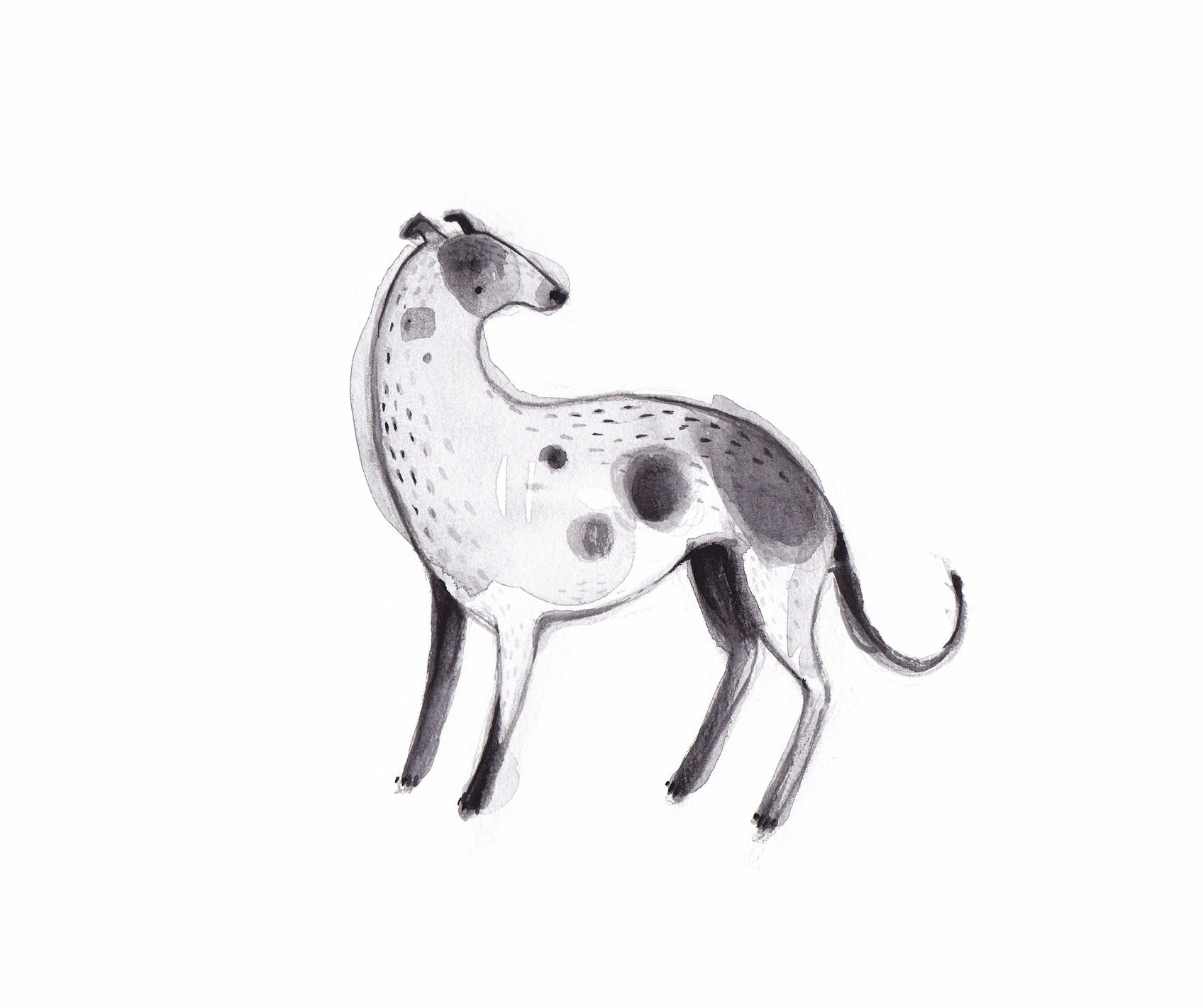 grey hound copy.jpg
