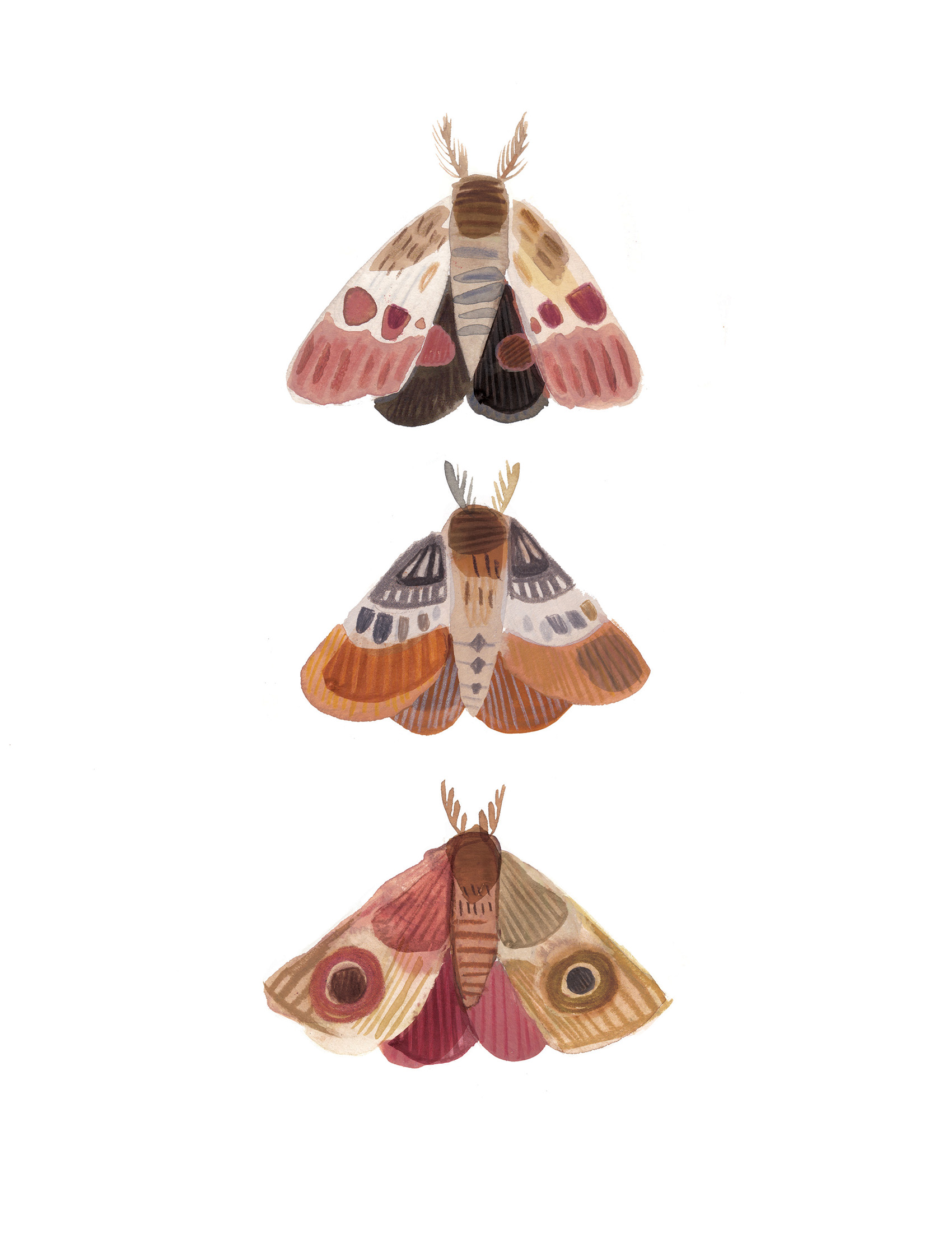 Moths LR.jpg