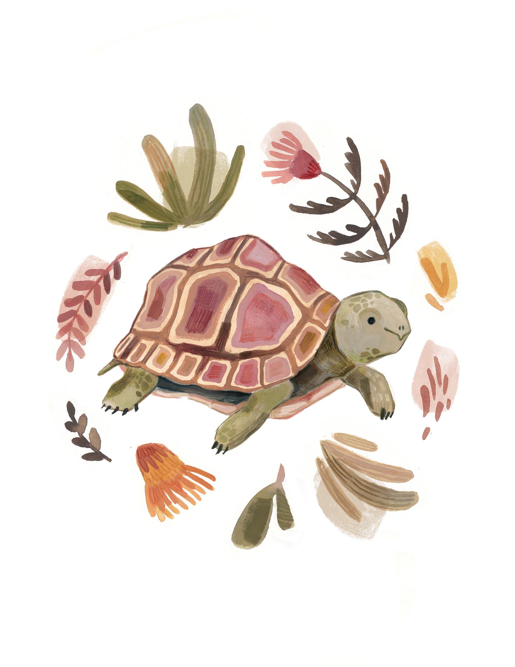 Tortoise LR.jpg