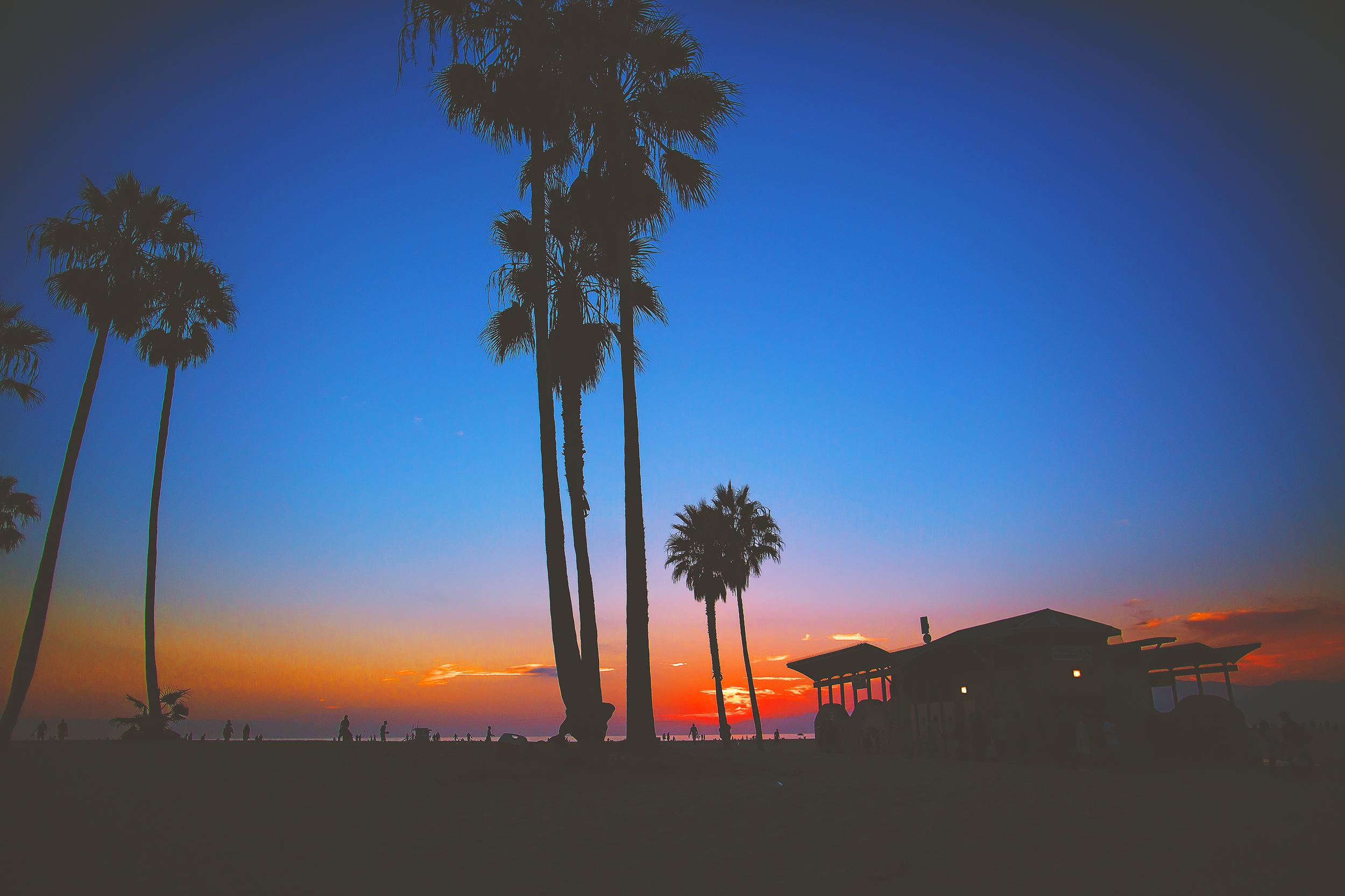 JLRoyal_Venice_PalmtreeSunsetsSFW.jpg