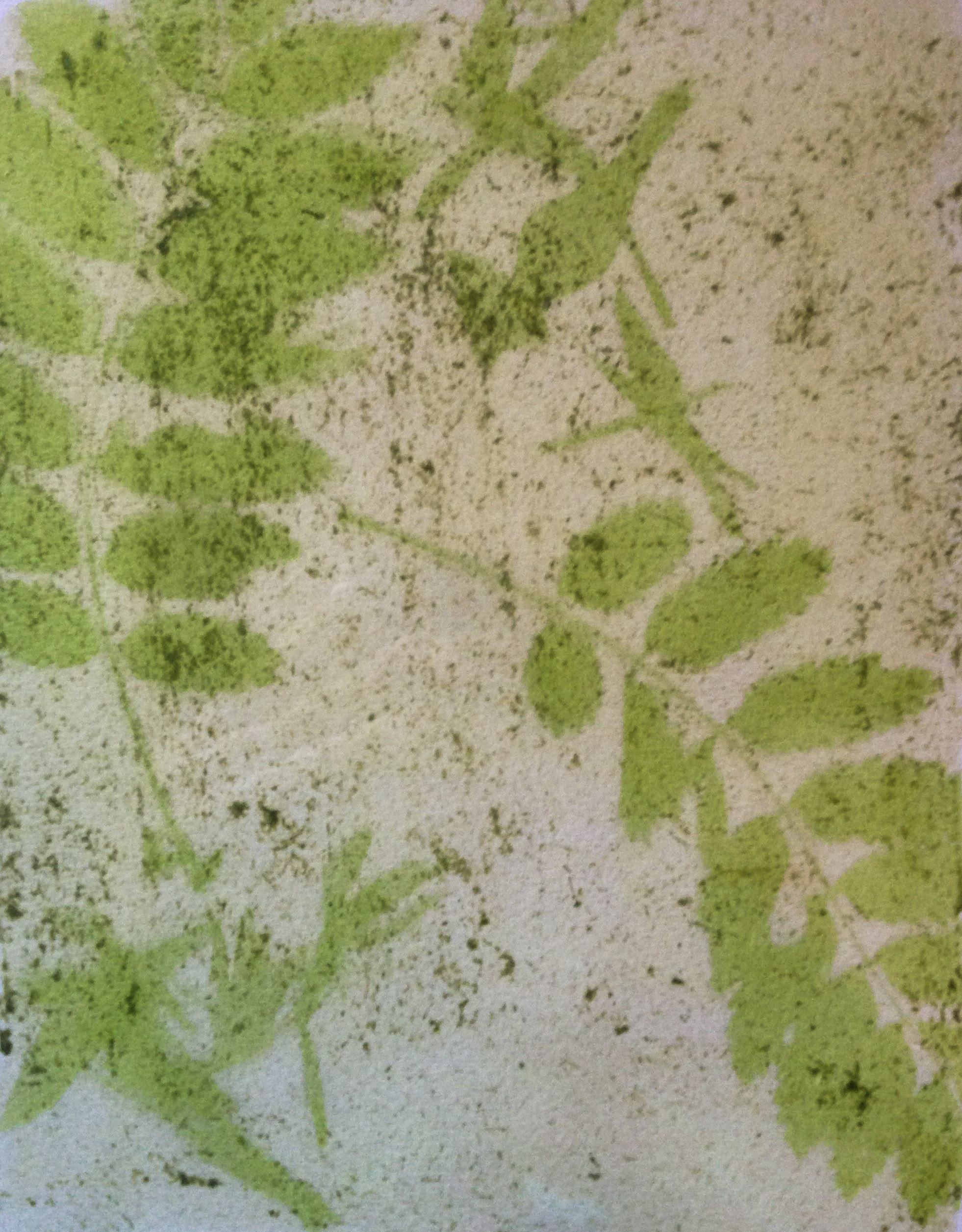 Spinach Emulsion